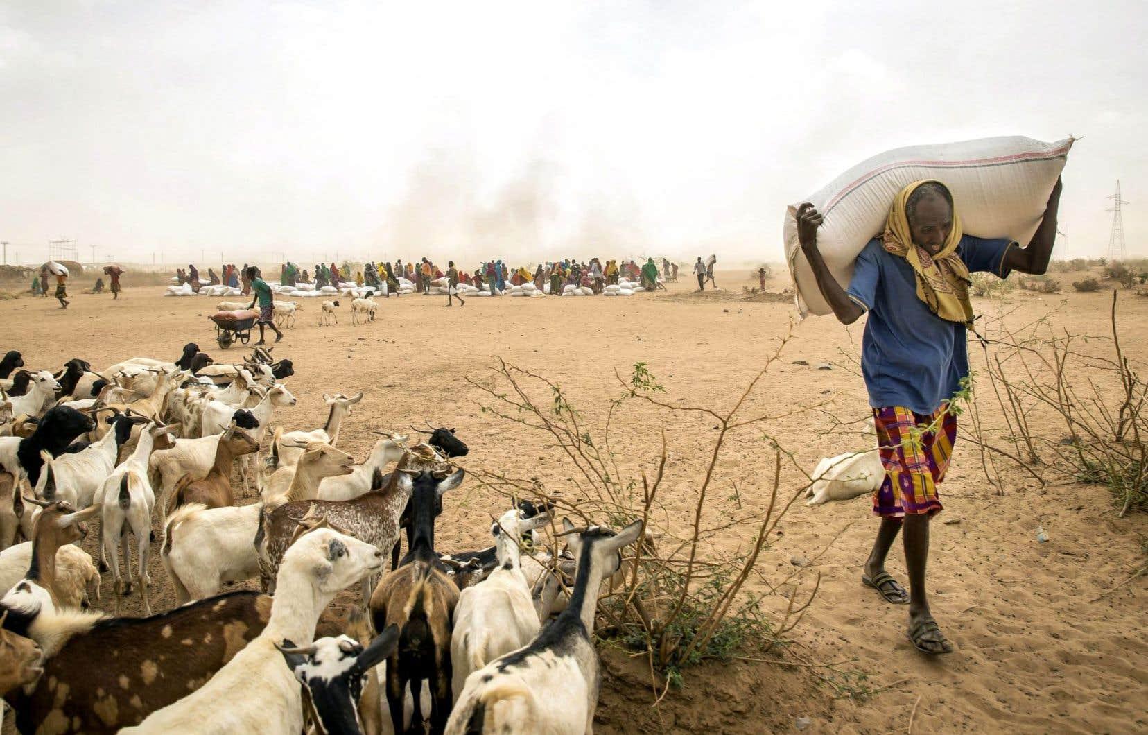L'Éthiopie affronte sa pire sécheresse en 50 ans. Début juillet, trois organisations des Nations unies ont estimé qu'«environ 40millions de personnes dans l'est et le sud de l'Afrique seront probablement aux prises avec une situation d'insécurité alimentaire».