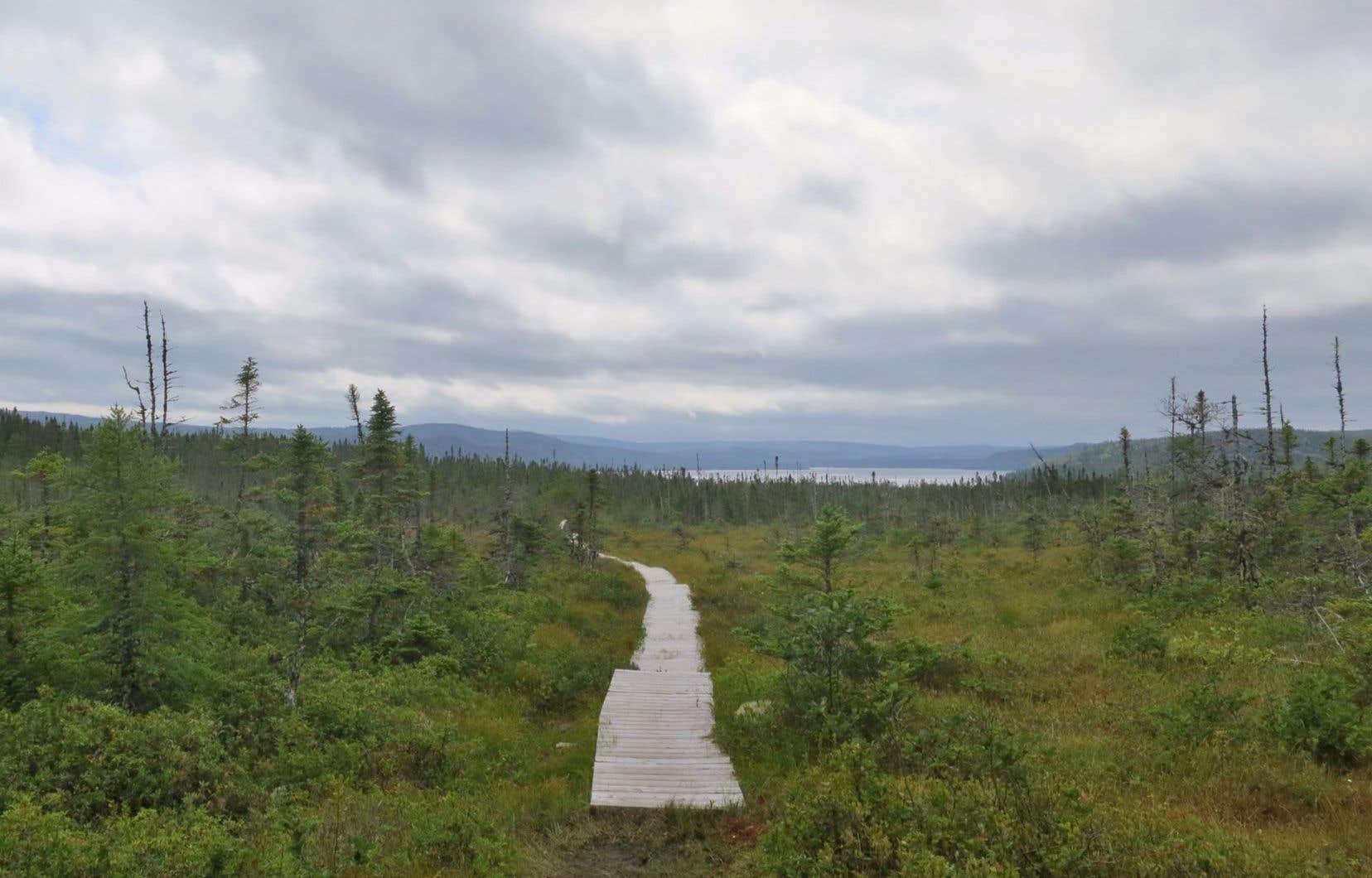 Le parc national Terra-Nova de Terre-Neuve est un refuge de tranquillité menacé par l'amant de la nature urbanisée «tout équipé», selon Richard Desmarais.