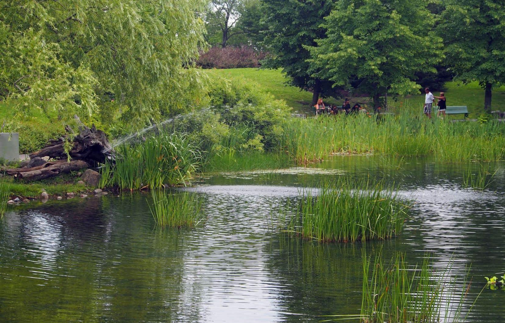 Un des attraits de l'arboretum est le jardin d'eau, dont les contours sont joliment aménagés et où sont décrites les cinq grandes catégories de plantes aquatiques.