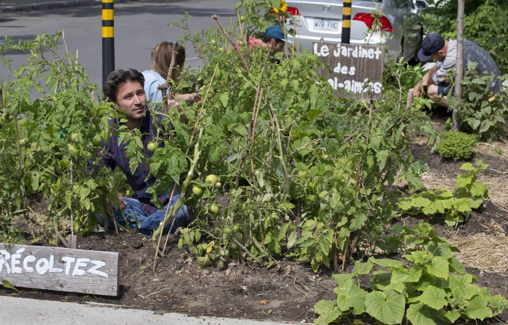 Le jardinage citadin de proximité a des racines à Montréal, comme ici, angle Beaubien et Drolet.