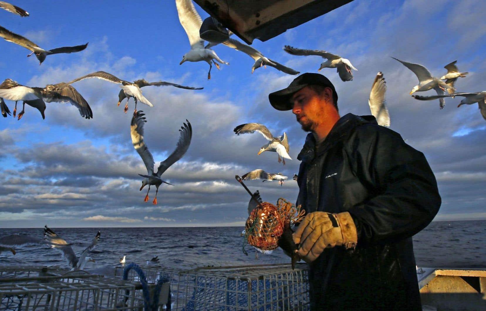 Pêche dans le Maine. Si l'interdiction est décrétée, le Canada et les États-Unis pourraient perdre 200millions en transactions.