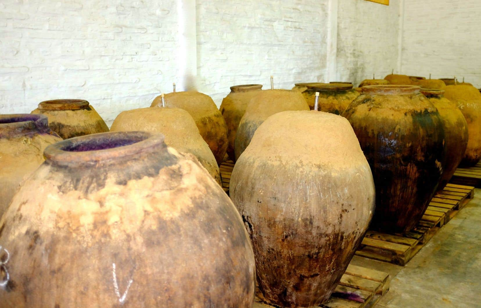 Des amphores prêtes pour la vendange. Ici chez De Martino, au Chili.