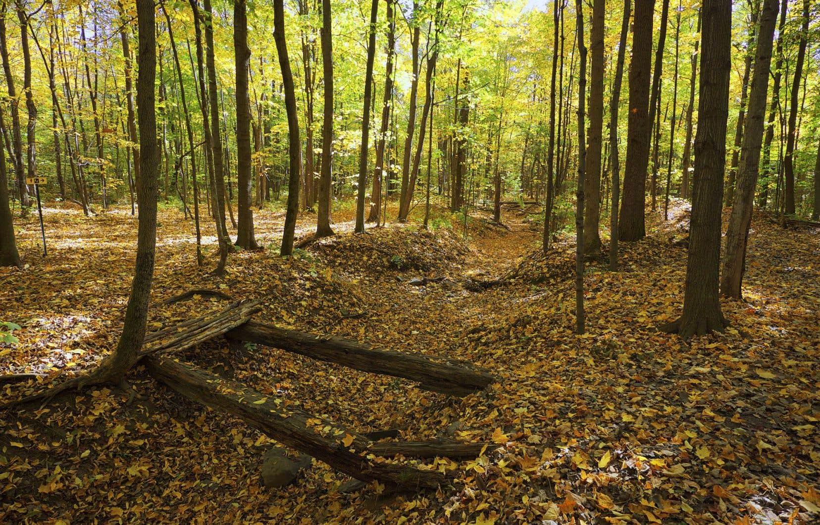 À Laval, le Bois de l'Équerre offre 10 km de sentiers de randonnée pédestre.
