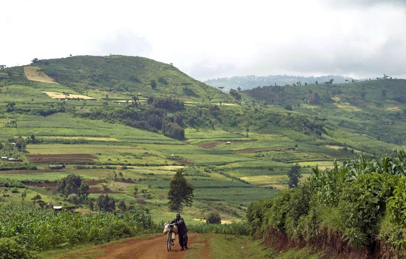 En Ouganda, le coût de l'inaction face aux changements climatiques serait de 22 à 38milliards de dollars entre2010 et2050.