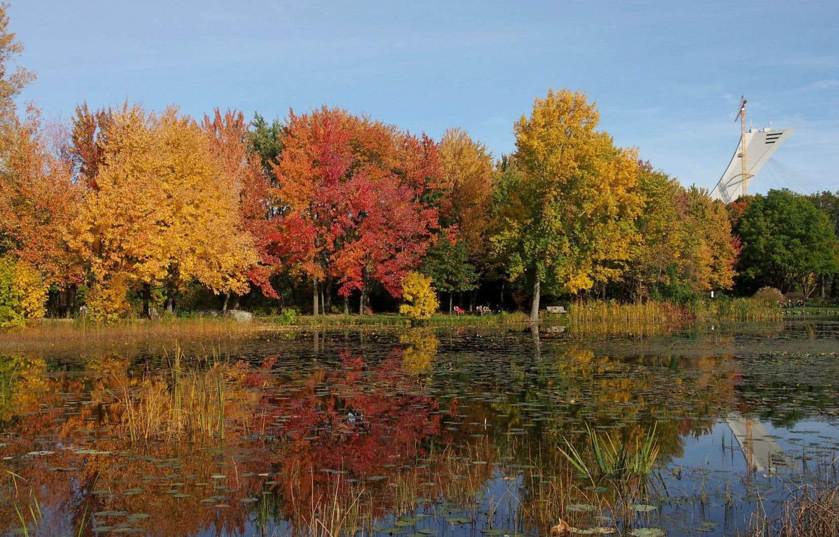 Les rouges, les oranges et les jaunes de l'automne annoncent la fin de la saison...