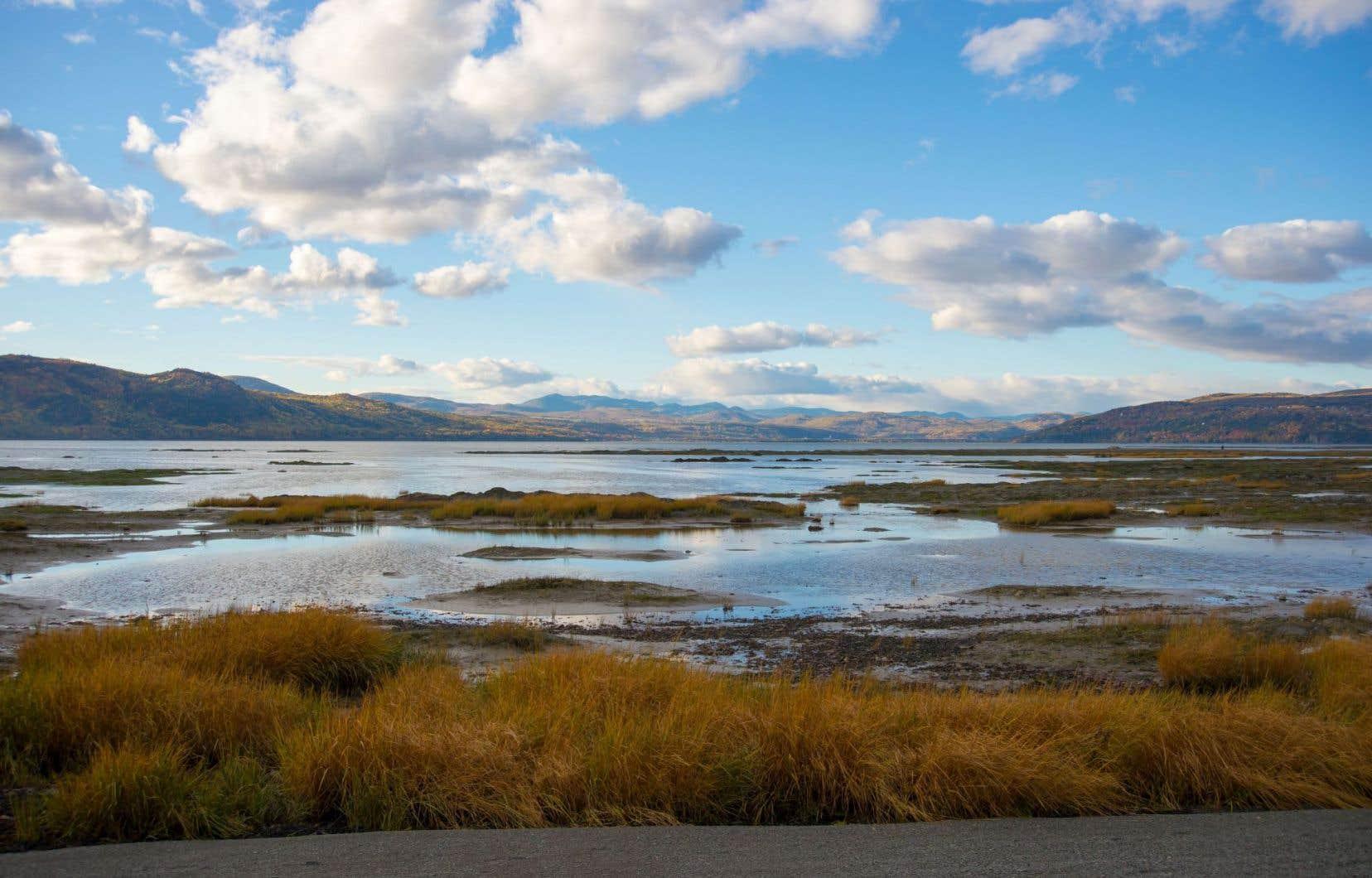 Le Québec compte un total de 101 territoires inscrits comme aire protégée, réserve de biodiversité, écologique ou aquatique « projetée », incluant cinq « réserves » de parc national.