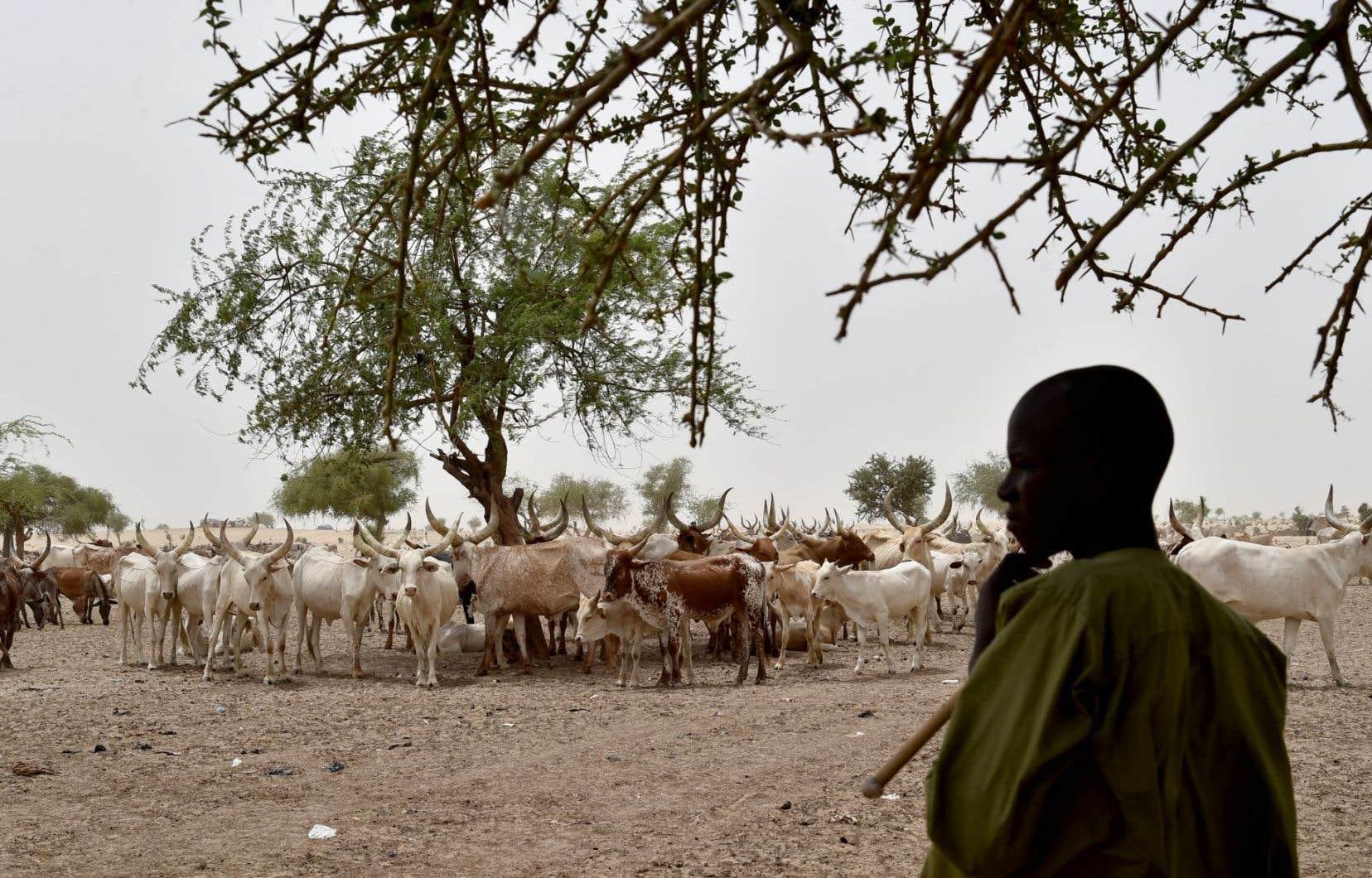 Les conflits entre les agriculteurs et éleveurs sont récurrents au Niger, notamment pendant la période des récoltes qui coïncide également avec les mouvements du bétail vers les grandes aires de pâturage.