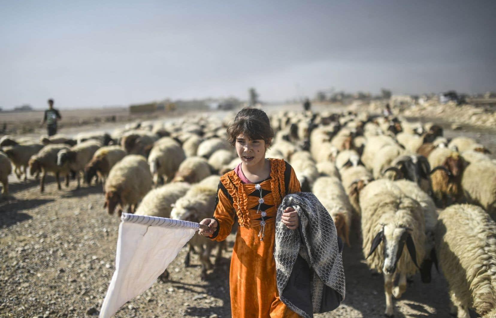 Parmi les déplacés fuyant les zones de combat, cette jeune bergère de Gogjali arborant un drapeau blanc devant son troupeau
