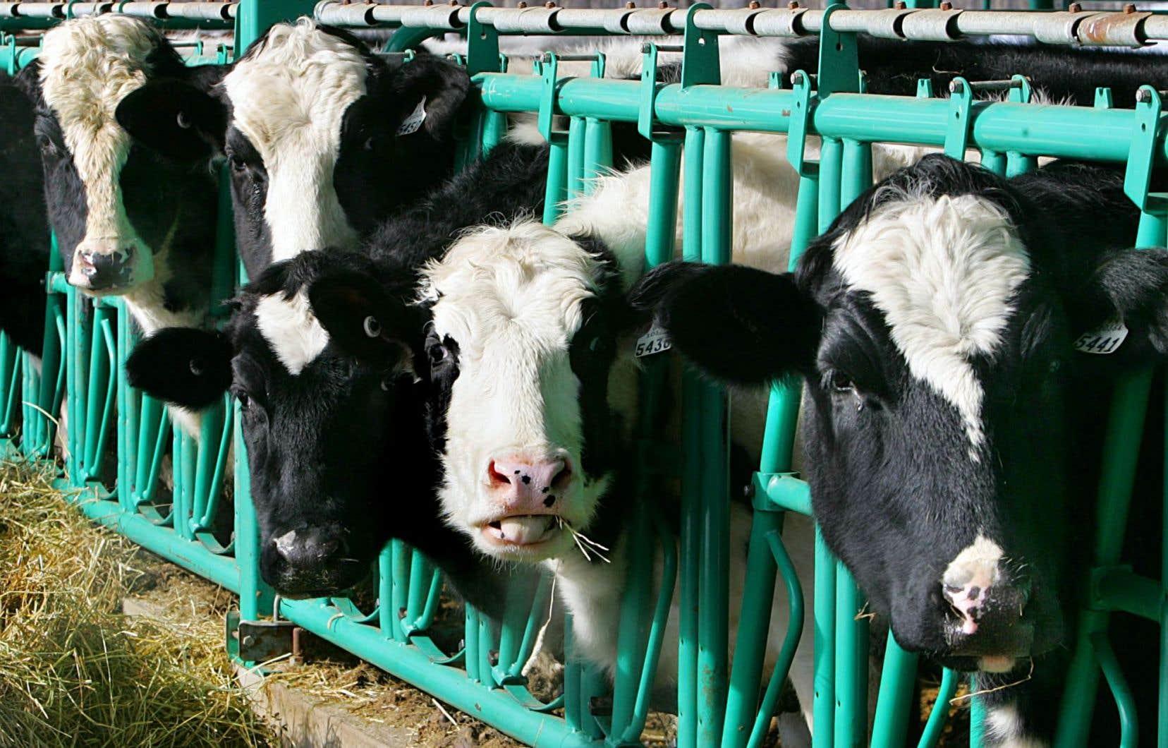 <p>Une première enveloppe de 250millions sur cinq ans aidera les fermes laitières à se moderniser alors qu'une autre, de 100millions sur quatre ans, porte sur la transformation des produits laitiers.</p>