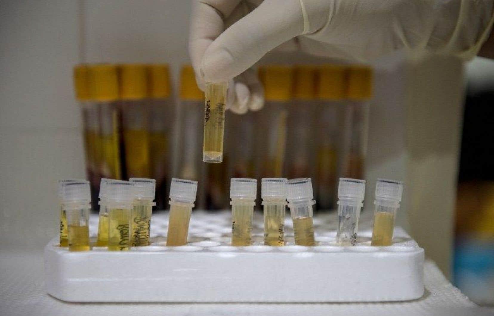 25 nouveaux cas de VIH sont recensés chaque jour aux Philippines.
