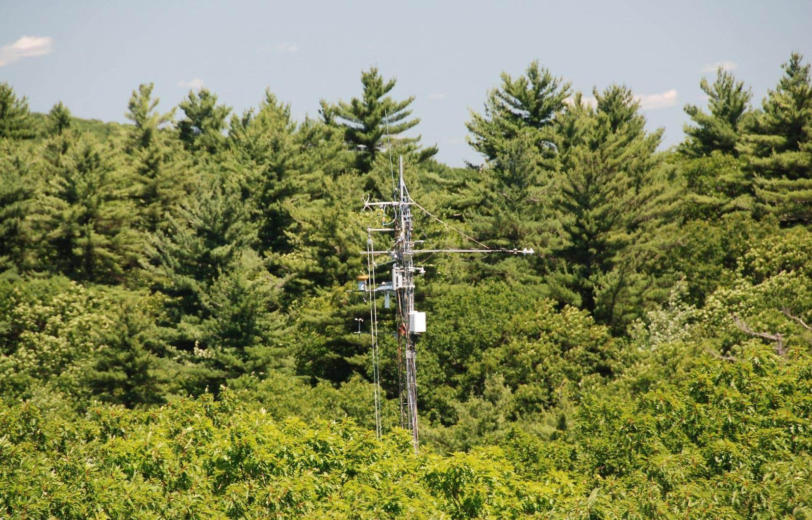 Sommet d'une tour en acier dotée de caméras et de capteurs qui permettent des mesures continues, dont celle du dioxyde de carbone depuis 1991