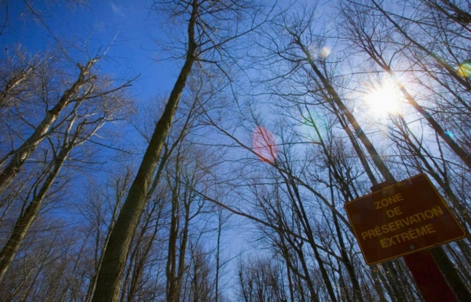 Le texte juridique que l'OIFQ soumet à ses membres en vue de le présenter à l'Office des professions du Québec précise que les technologues spécialisés dans les écosystèmes et la forêt travailleraient sous la responsabilité des ingénieurs par voie de délégation.