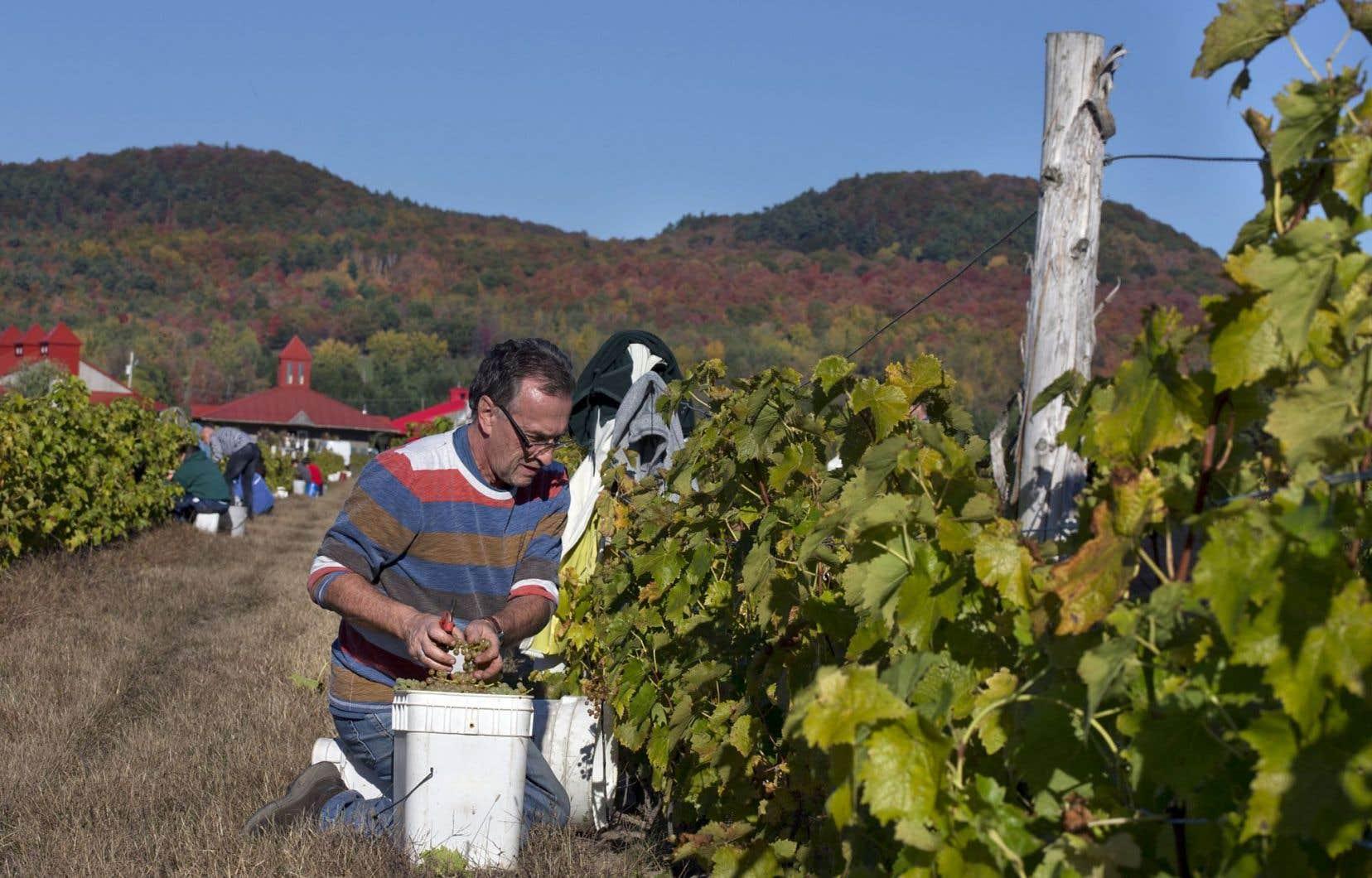 Au Québec, ce qui se rapproche le plus du tourisme durable est le réseau des circuits thématiques agrotouristiques ou patrimoniaux, tels que la Route des vins, le Circuit du paysan ou le Tour gourmand de la Gaspésie.