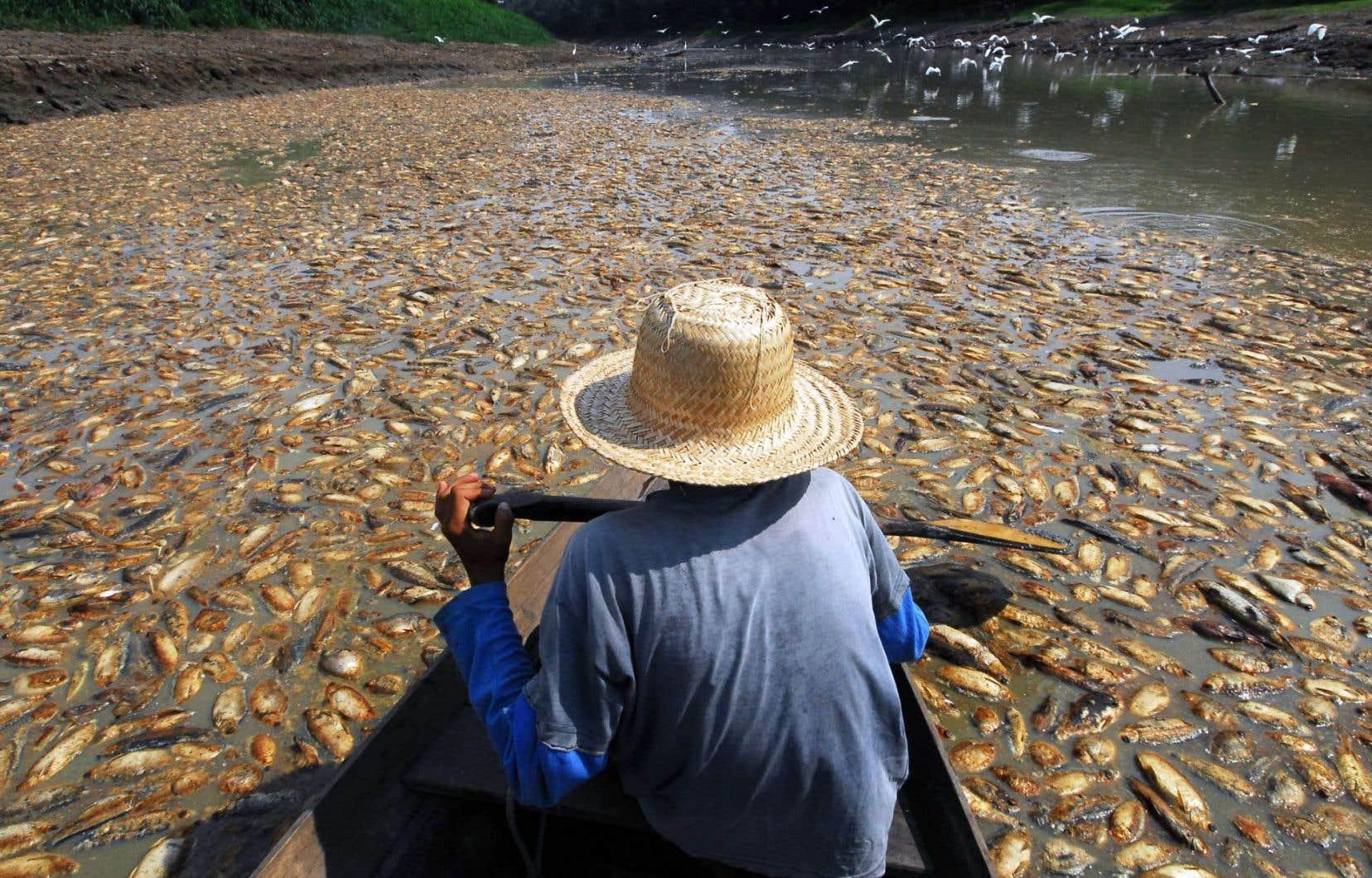 Un pêcheur brésilien constate le décès de milliers de poissons à Manaus, dans l'État d'Amazonas, au Brésil,en raison de la sécheresse sévère dans le bassin amazonien.
