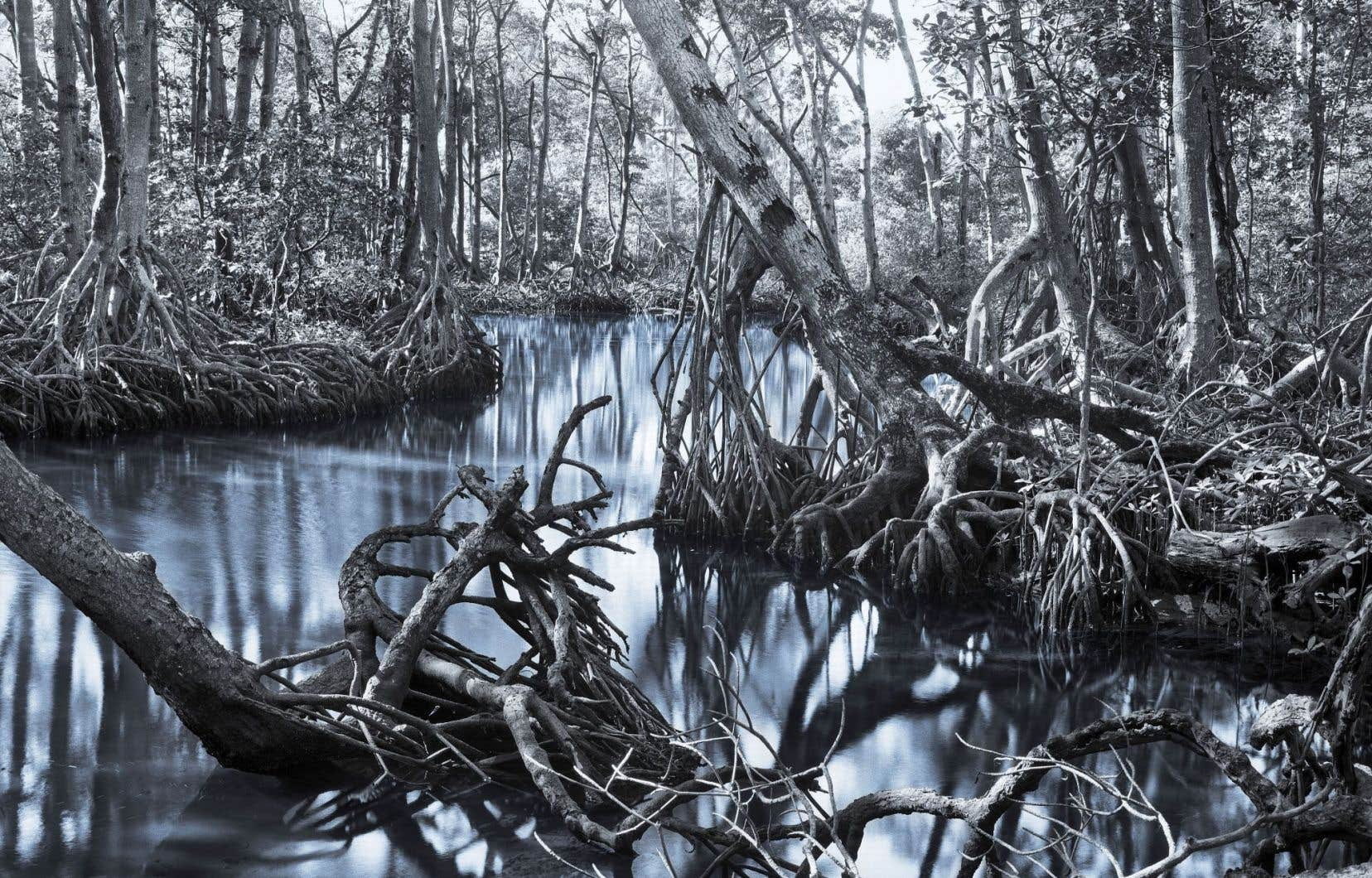 Holly King, «World Beyond the Water», détail, 2009