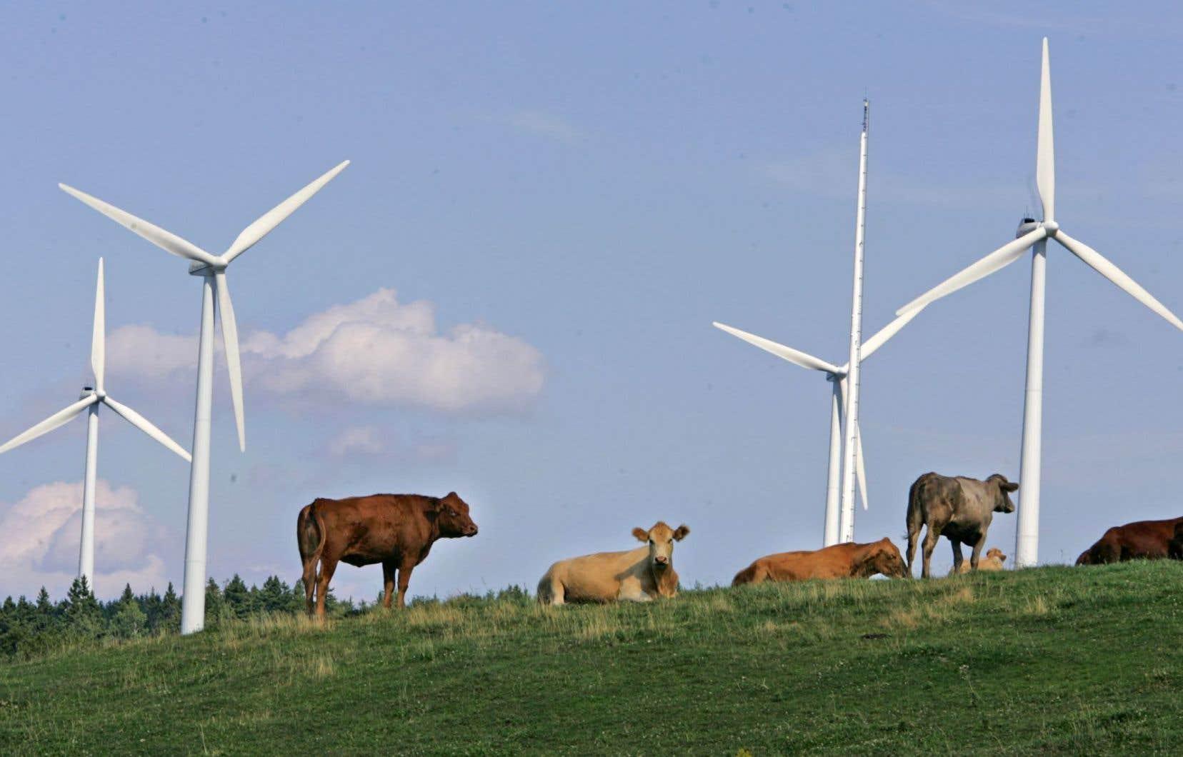 Le Mouvement Desjardins engage près de 550 millions dans 31 parcs éoliens.