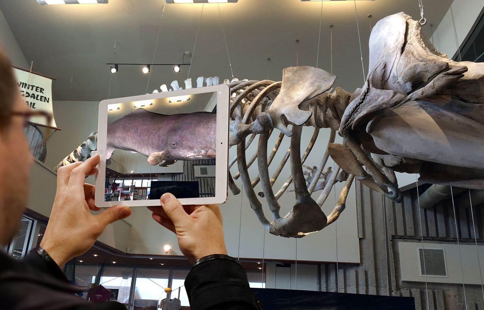 Aux îles de la Madeleine, le Musée de la mer fait revivre le cachalot dont le squelette est exposé dans le grand hall depuis 2015. Grâce à la réalité augmentée, celui-ci va littéralement se mettre à bouger.