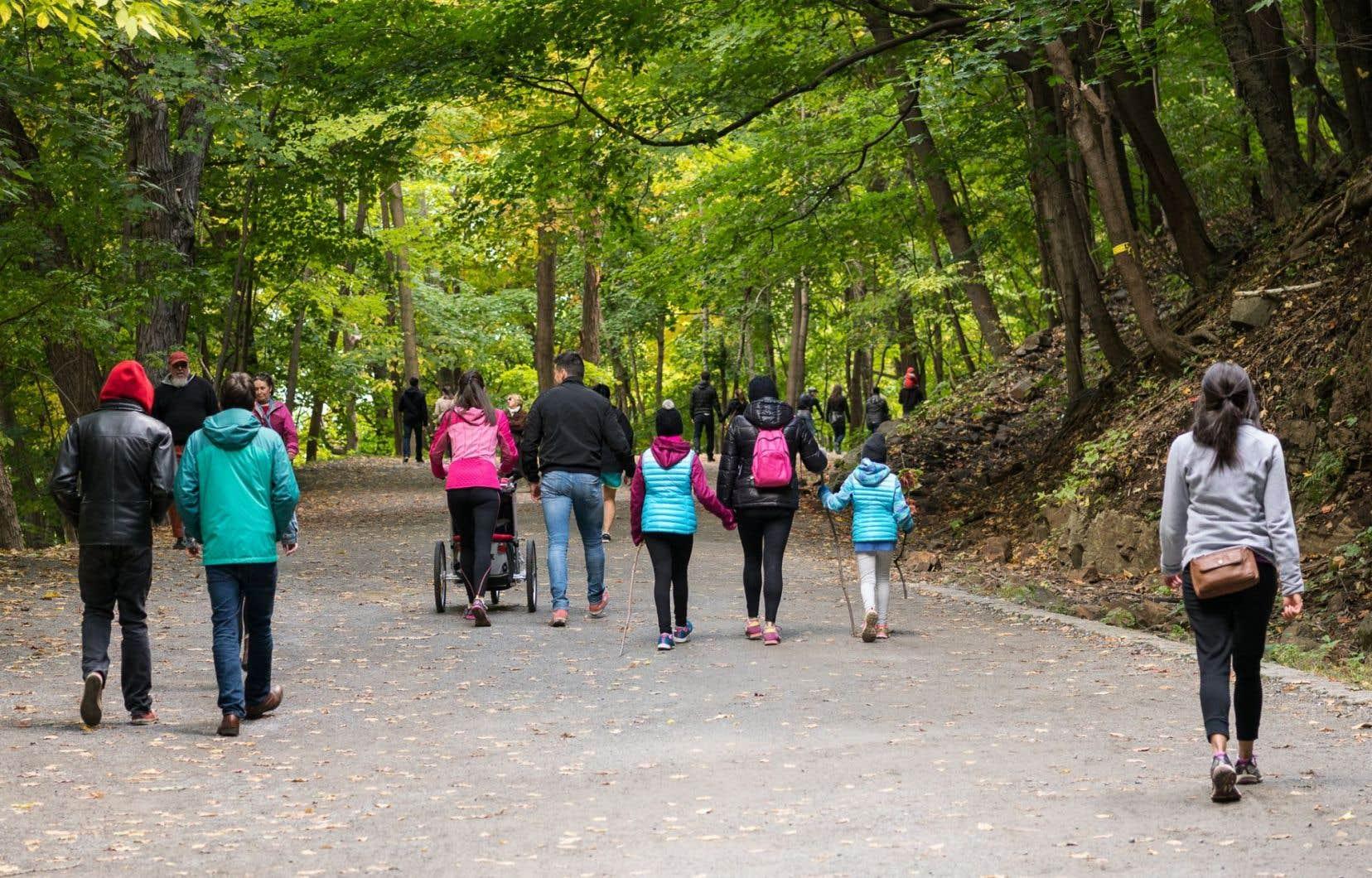 Plus qu'un simple guide urbano-sylvestre, «Une île d'arbres» se déploie comme une petite école de vigilance à l'élégance de la nature.