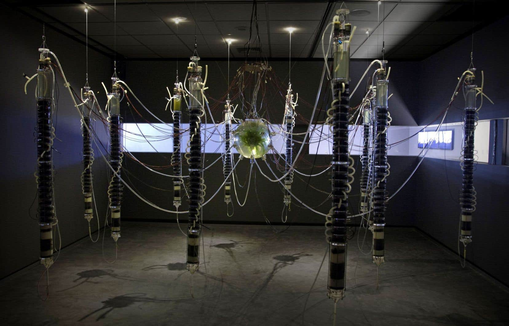 Gilberto Esparza, «Plantas autofotosintéticas» (Plantes autophotosynthétiques), vue de l'installation à l'Espacio Fundación Telephónica, Lima, 2014