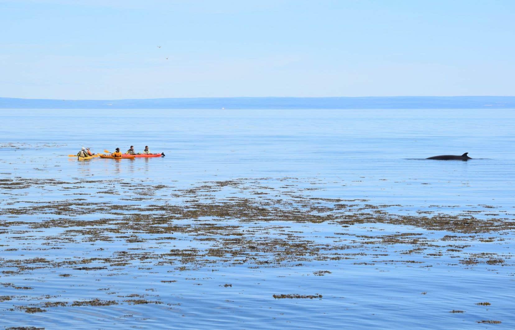 Le parc marin du Saguenay–Saint-Laurent est le seul du genre au Québec. Il a été établi d'abord pour protéger l'habitat des cétacés.