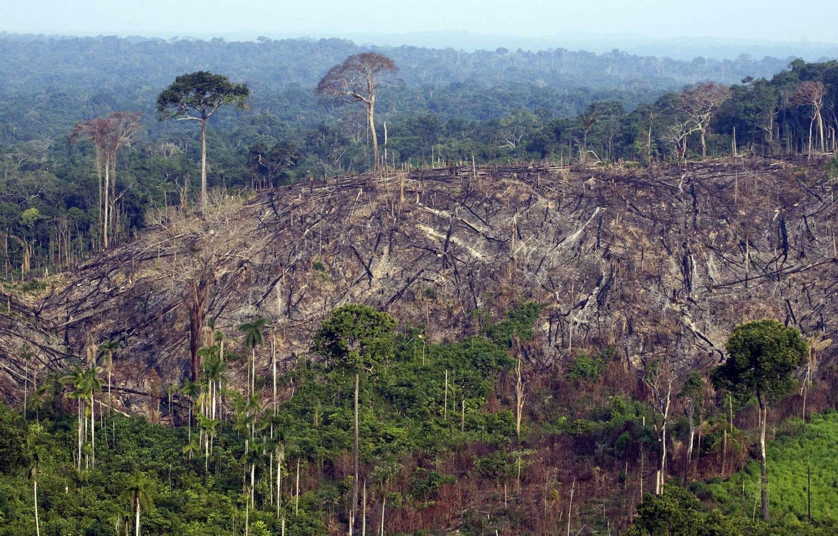 Vue d'une partie de la forêt nationale de Jamanxim dans l'État du Para, au Brésil, qui a été illégalement déforestée