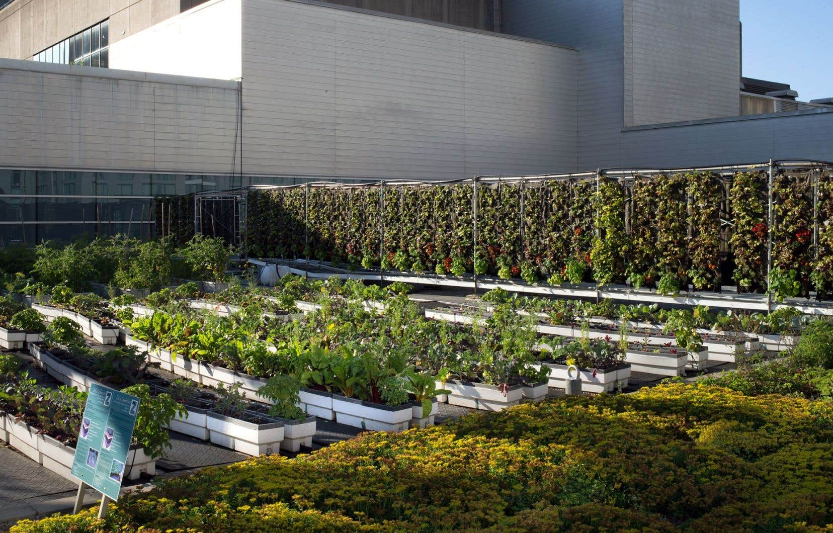 Le Palais des congrès a verdi près du cinquième de sa toiture pour accueillir, entre autres, un potager.