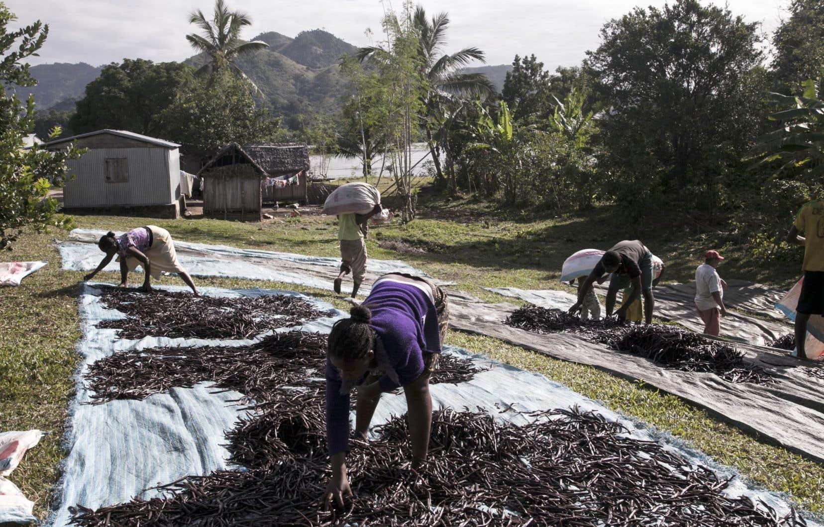 La Grande Île fournit 80% de la production mondiale de vanille, produit dont le marché a été libéralisé en 1989.