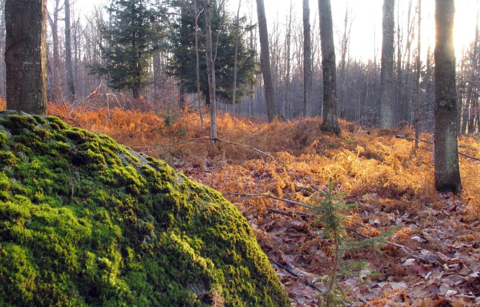 Le Festival d'automne de Sutton proposera, entre autres, des randonnées guidées.