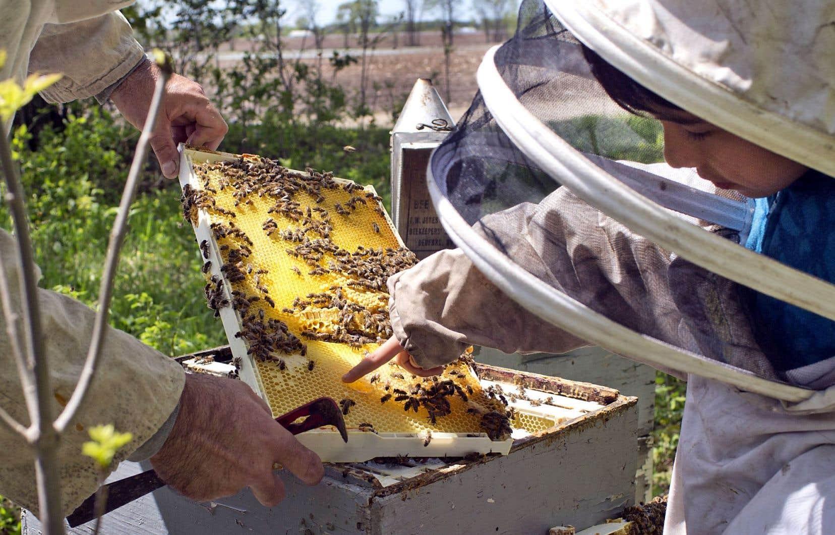 Selon de nombreuses études, l'usage des néonicotinoïdes, en conditions variées, cause des mortalités importantes parmi les abeilles domestiques et sauvages.<br />
