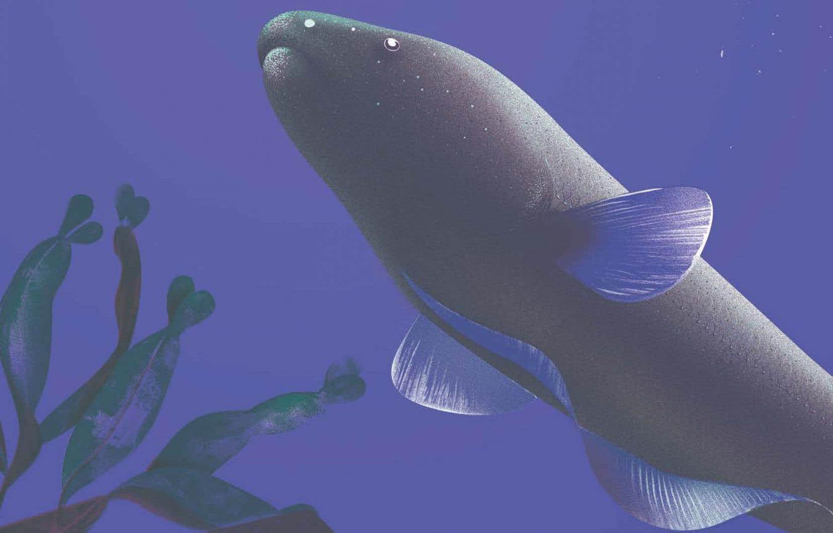 L'aptéronote, ou «poisson-couteau», émet à haute fréquence grâce à un organe électrique situé dans sa queue.