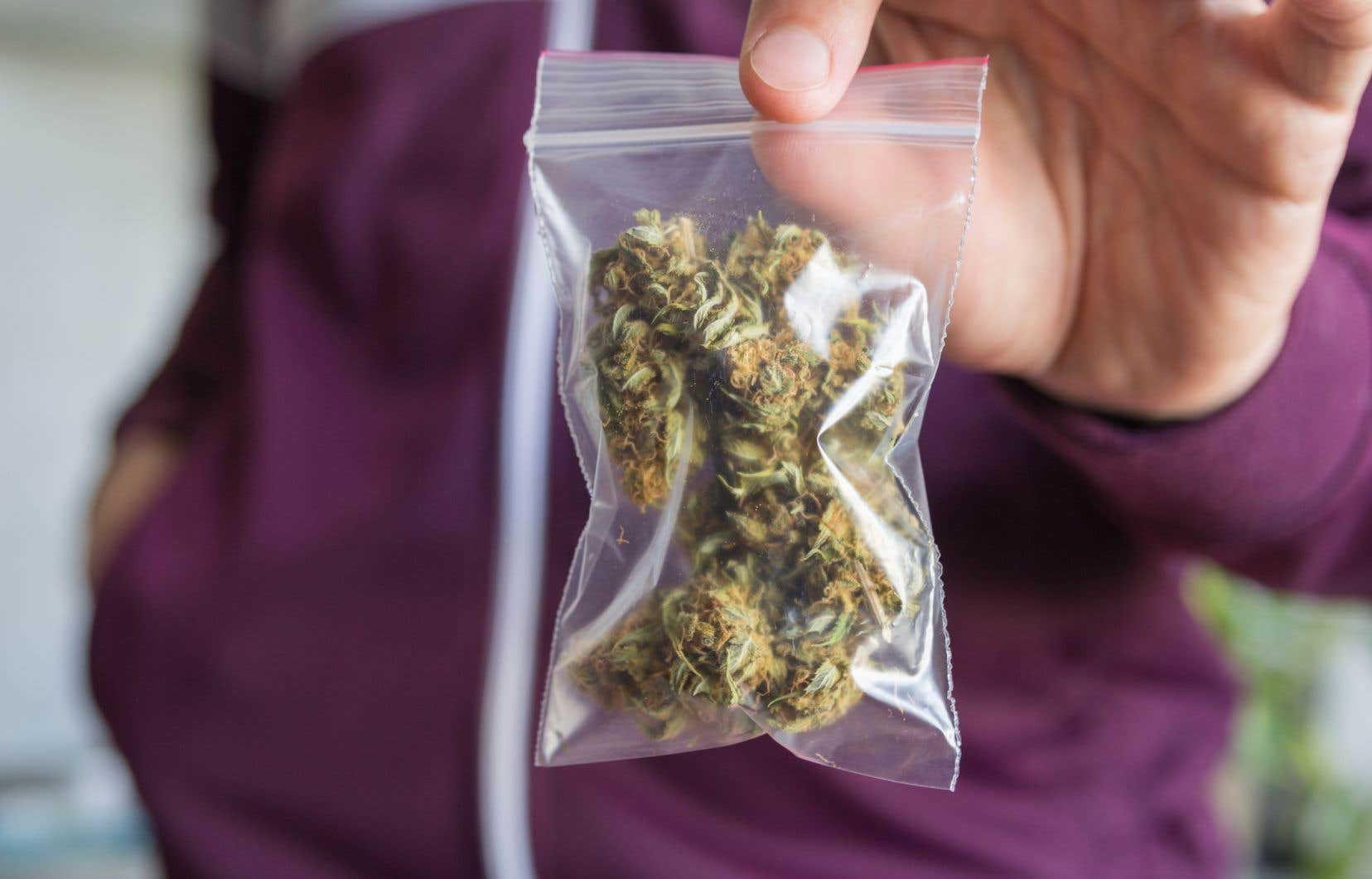 L'an dernier, le directeur parlementaire du budget prédisait un marché du cannabis légal de 655 tonnes en 2018, qui pourrait atteindre 734 tonnes en 2021.