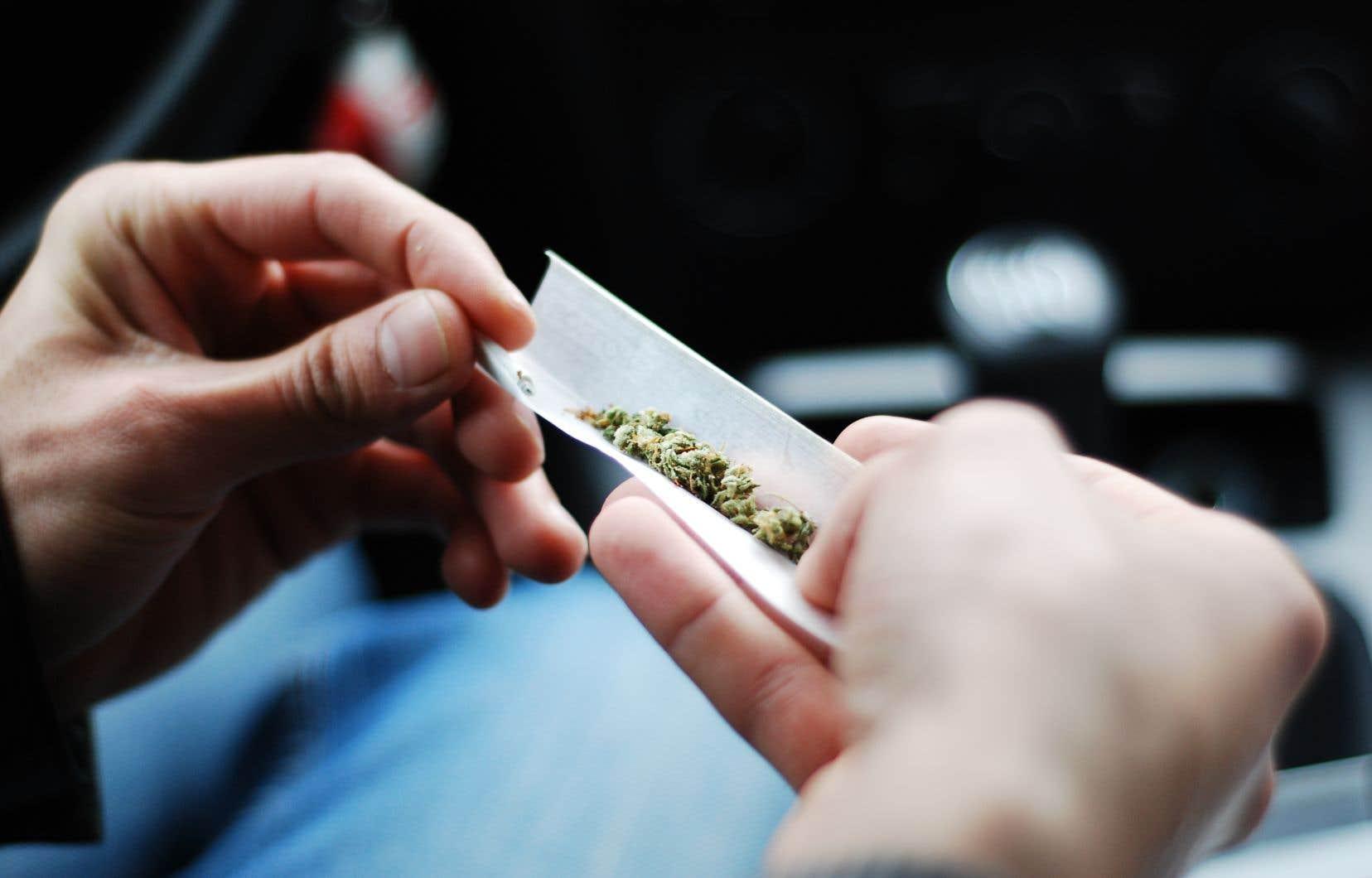 Les jeunes médecins s'inquiètent de l'absence de formation prévue pour les préparer, dès juillet prochain, à la légalisation de la marijuana.