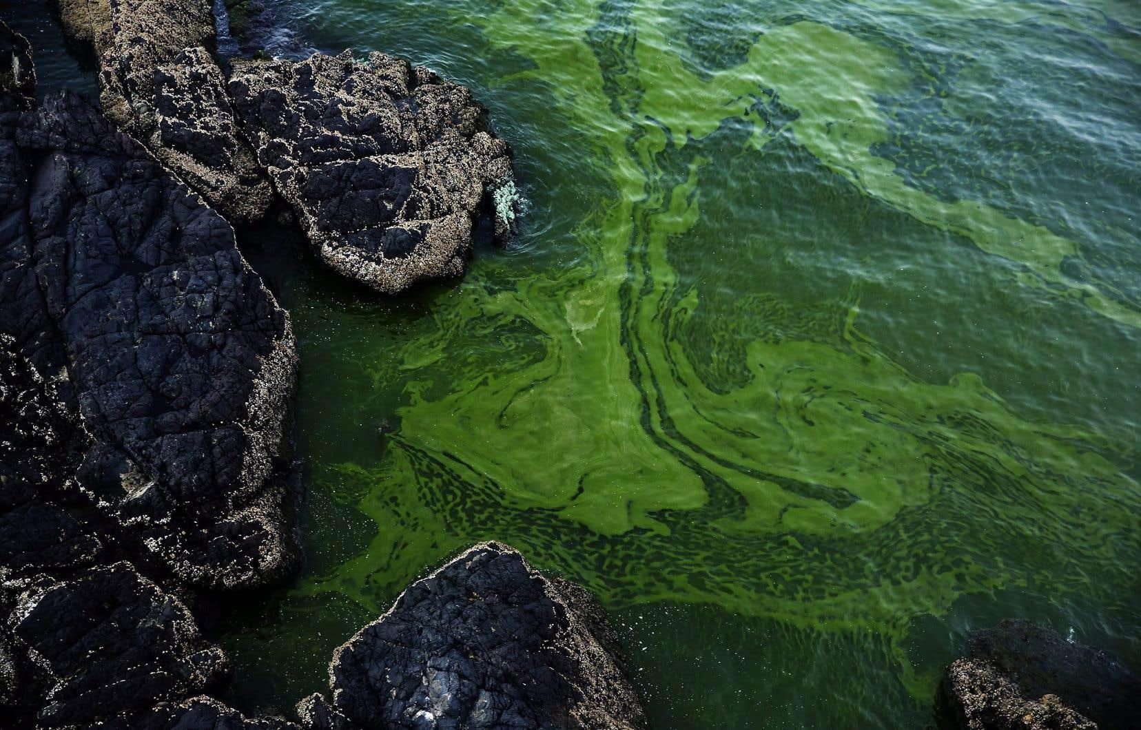 On observe une croissancephénoménale d'algues qui, une fois mortes, se décomposent et monopolisent tout l'oxygène disponible.
