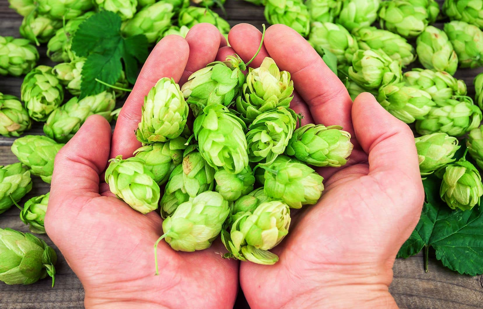 Hops without alcohol |  The duty