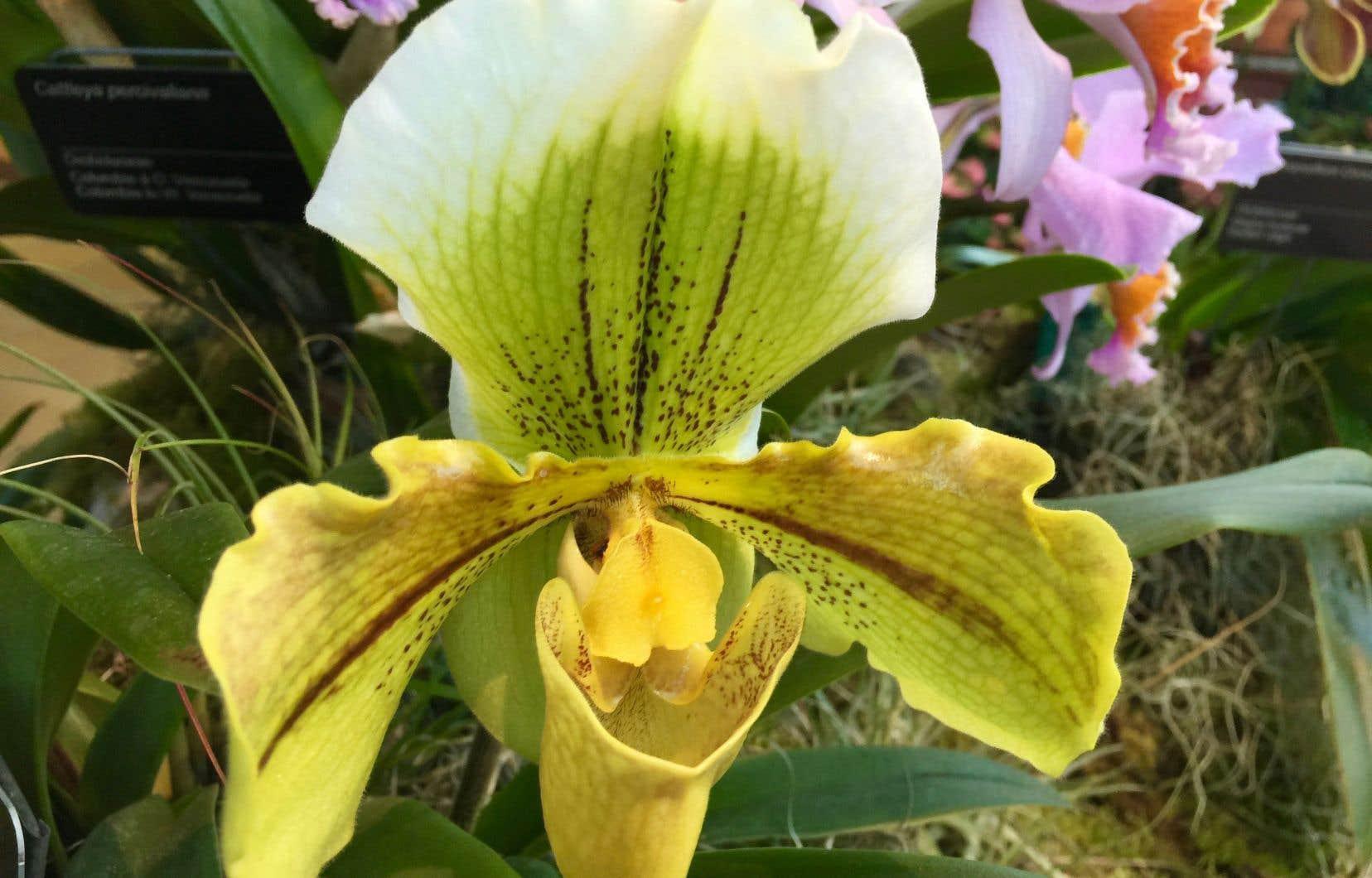 La collection d'orchidées au Jardin botanique de Montréal est l'une des plus importantes d'Amérique du Nord.