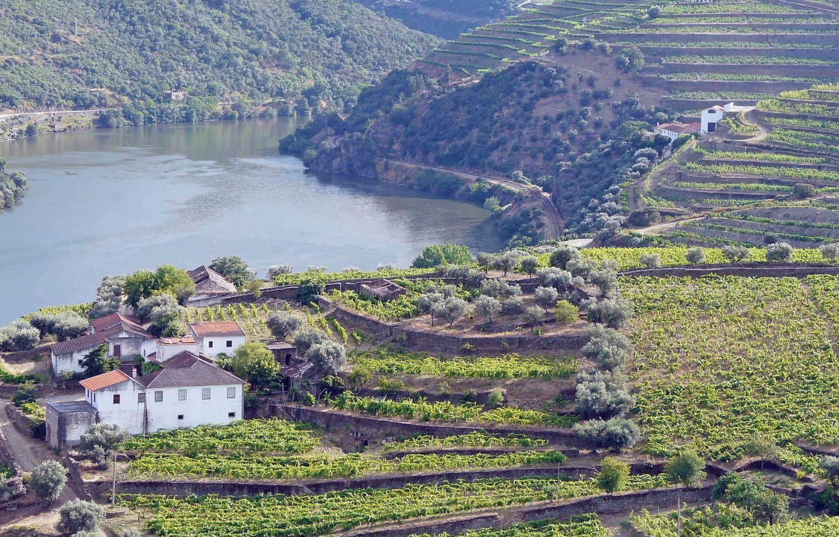 Le fleuve Douro frayant son chemin dans les vignobles escarpés du Portugal