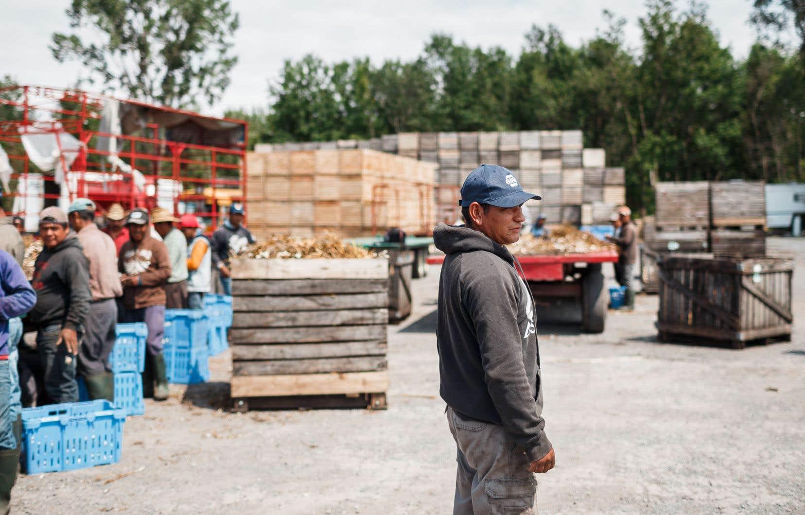 Au Québec seulement, au moins 900 fermes embauchent chaque été de la main-d'œuvre migrante.