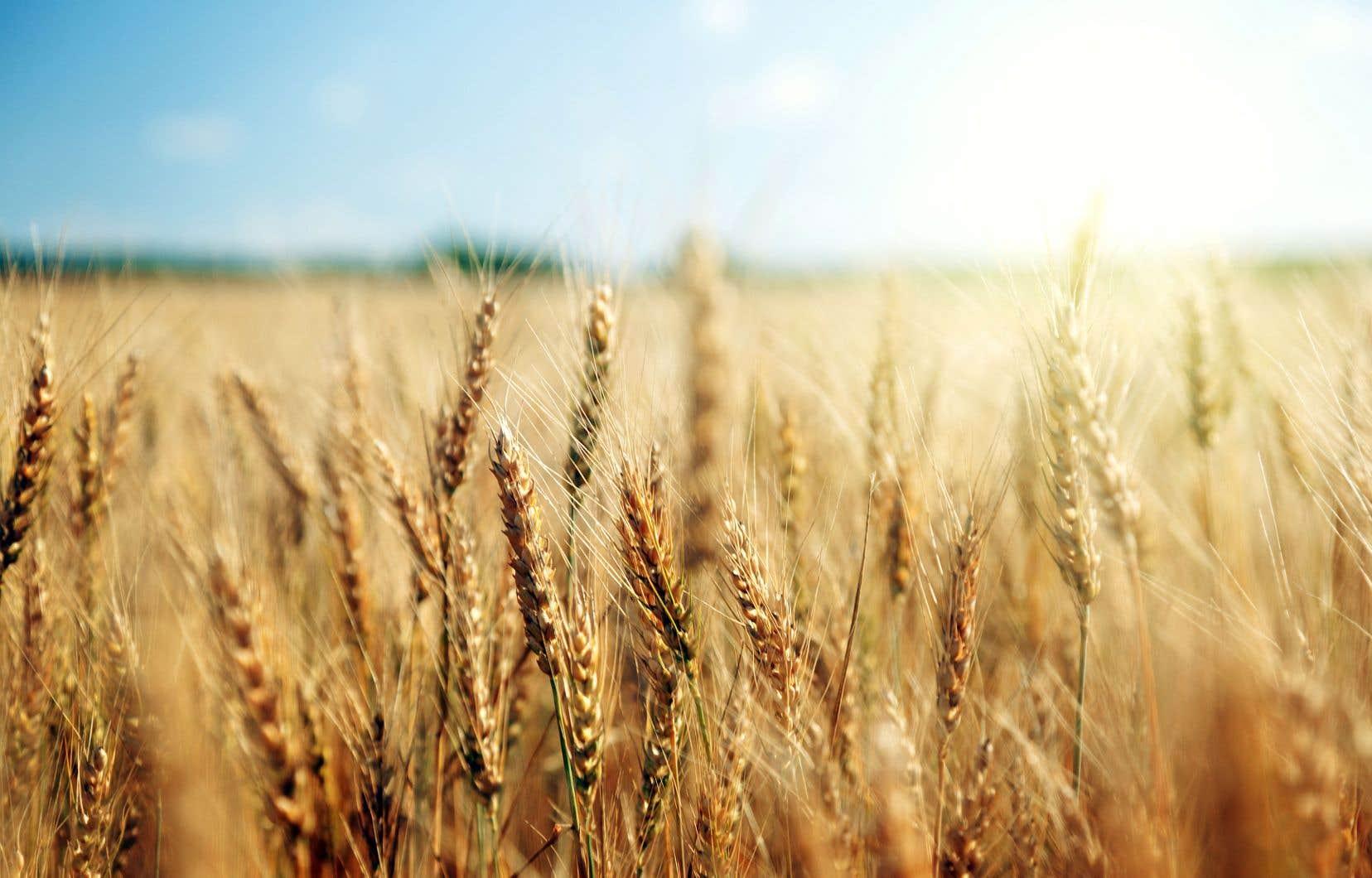 L'entreprise Pangea achète des terres et s'associe à des agriculteurs pour créer une société de production.