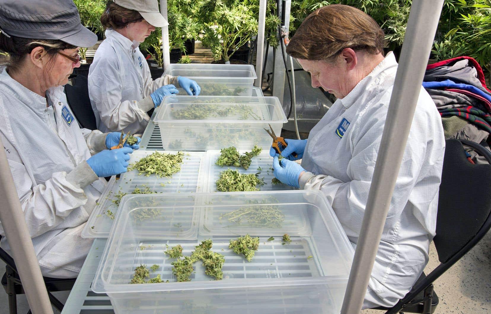 Les lois de l'économie de marché vont désormais jouer pleinement pour structurer le marché du cannabis.