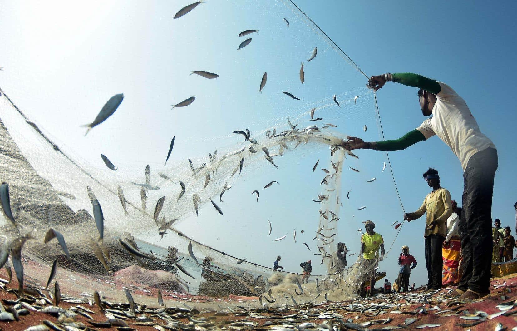 Les données recueillies pourraient aider à façonner les règles internationales pour réduire la pêche illégale.