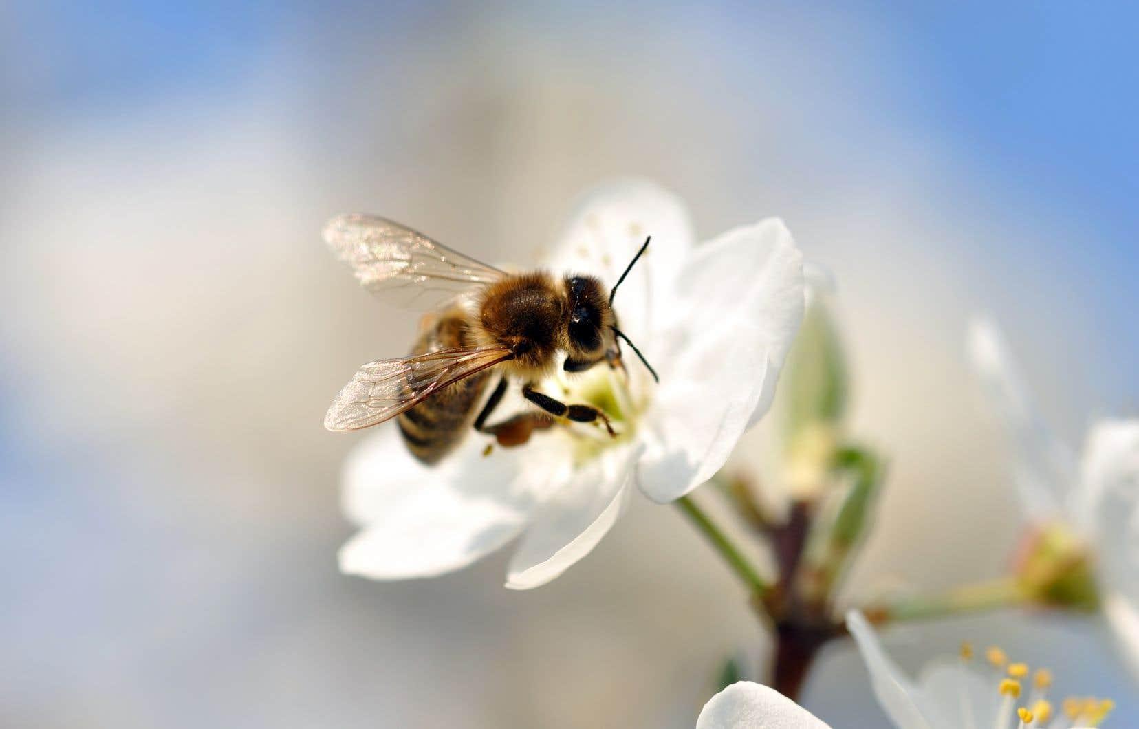 Le président du conseil d'administration du CEROM nie contredire les résultats obtenus par ce centre au sujet des pesticides néonicotinoïdes et leurs effets sur les abeilles.