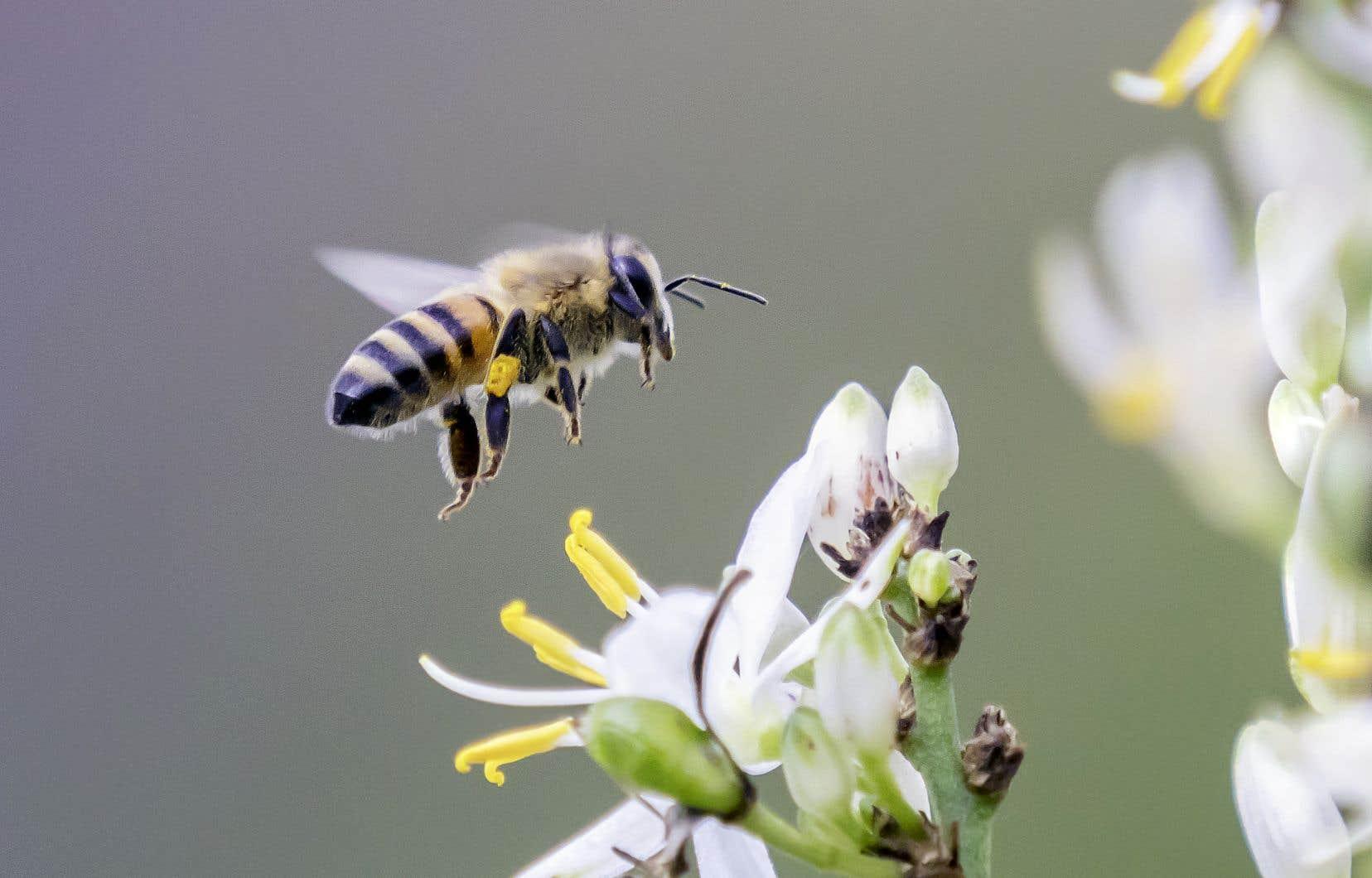 Le consensus scientifique mondial veut que les néonicotinoïdes aient des effets délétères sur les abeilles domestiques et sur plusieurs autres insectes.