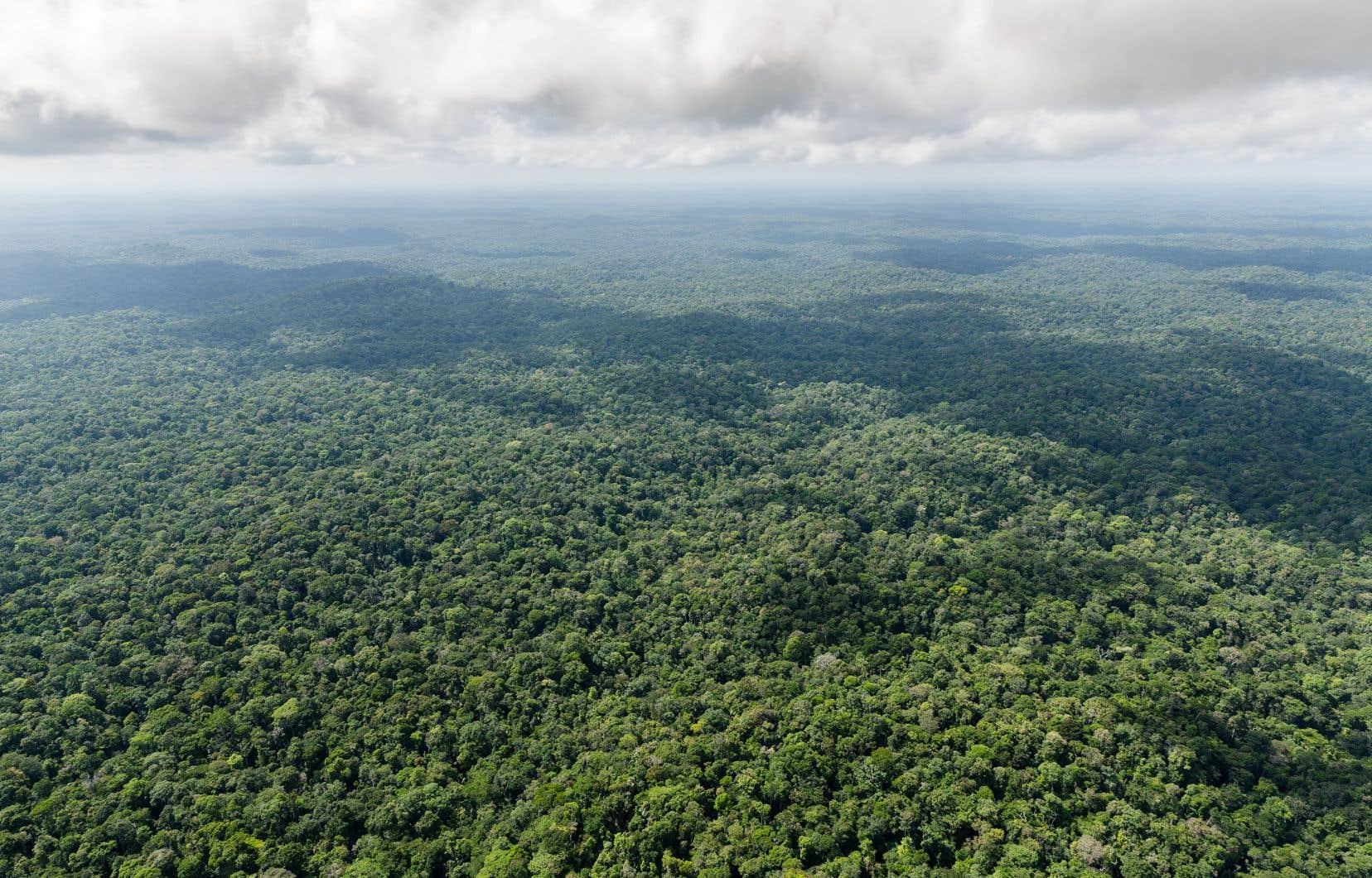 À +4,5°C, 69% des espèces de plantes risquent de disparaître en Amazonie.