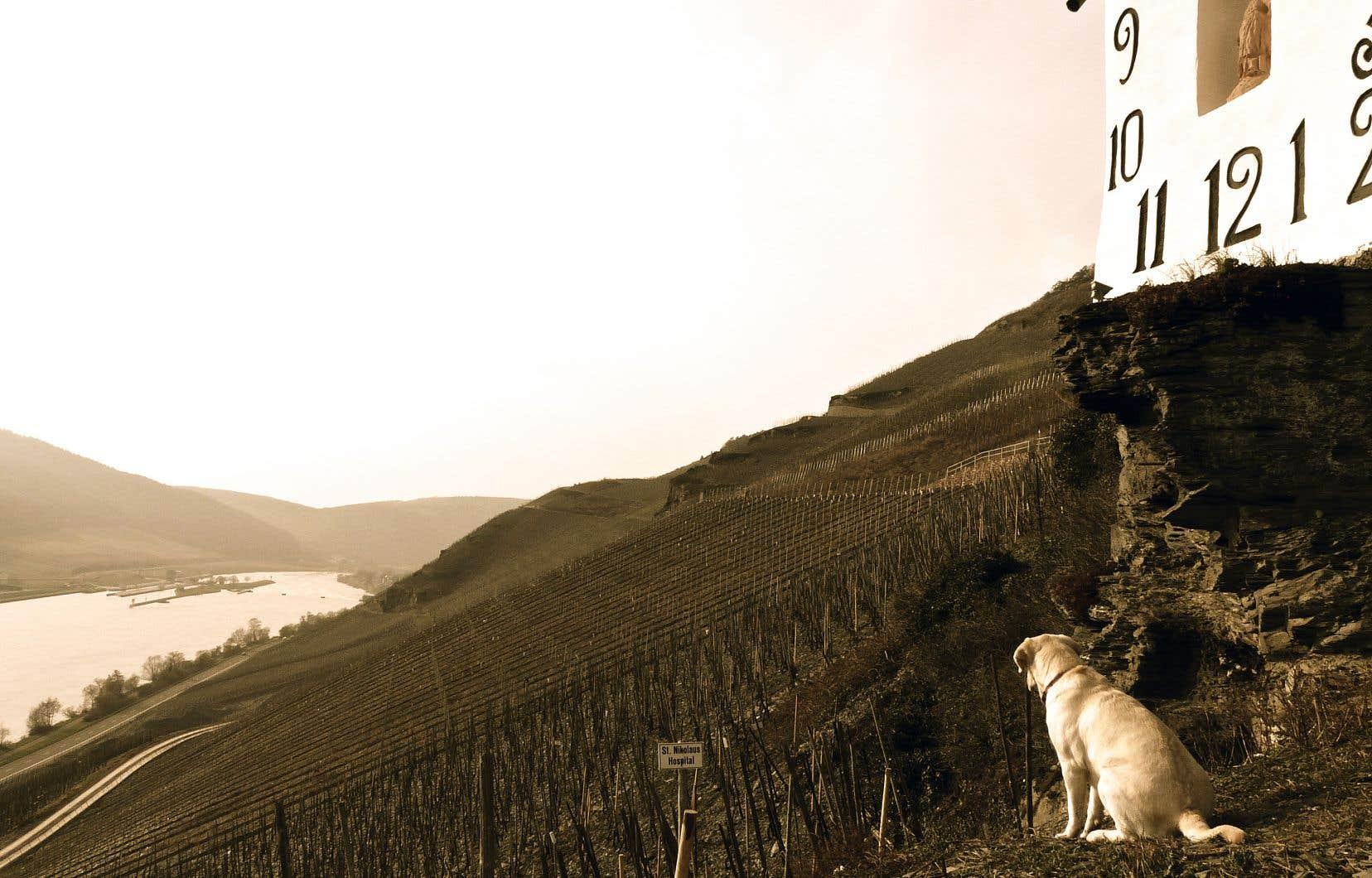 Vignoble pentu en Moselle