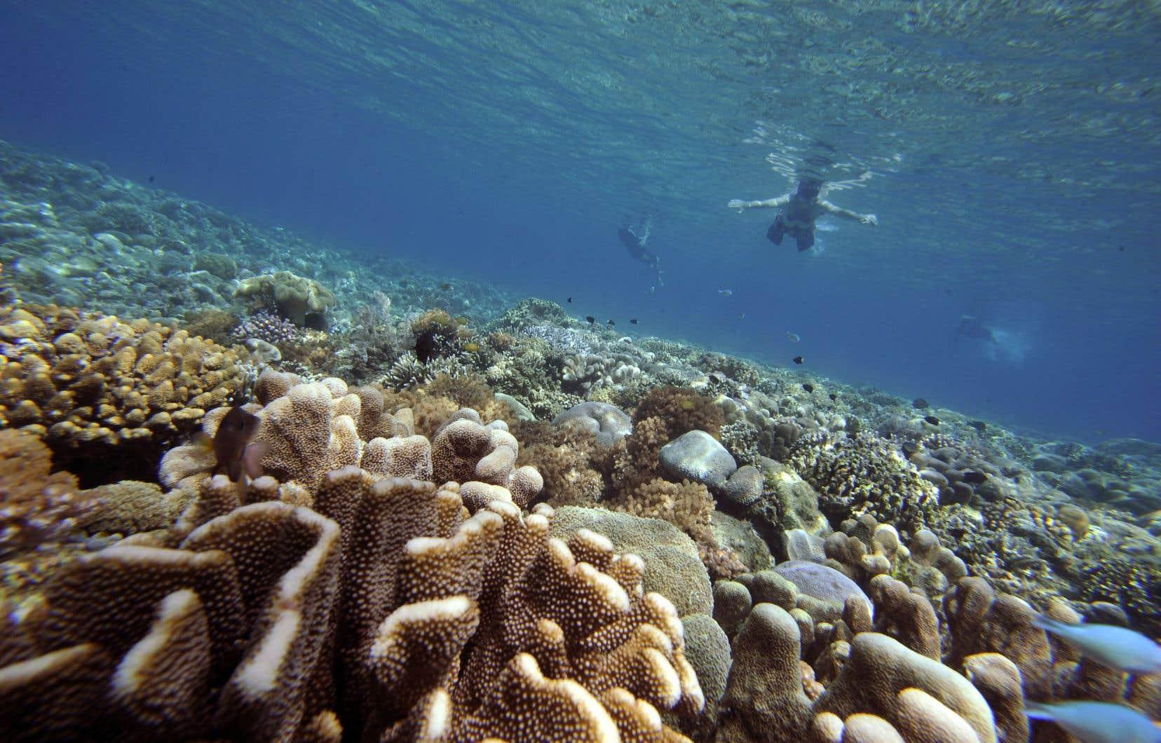 Une étude américaine a révélé qu'un ingrédient entrant dans la composition des crèmes solaires provoquait la mort de certains coraux.