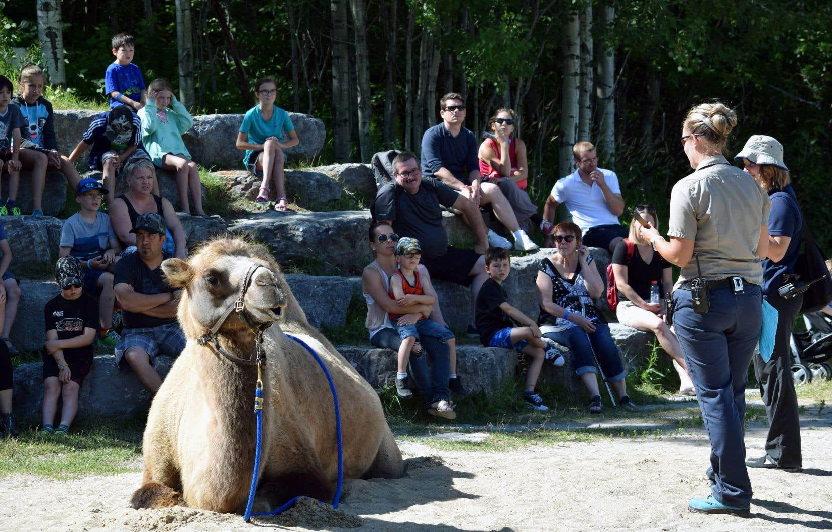 L'enveloppe globale de trois millions offre un répit d'au plus deux années aux neuf institutions muséales désignées, dont le Zoo sauvage de Saint-Félicien, qui compte plus de 1000 animaux.