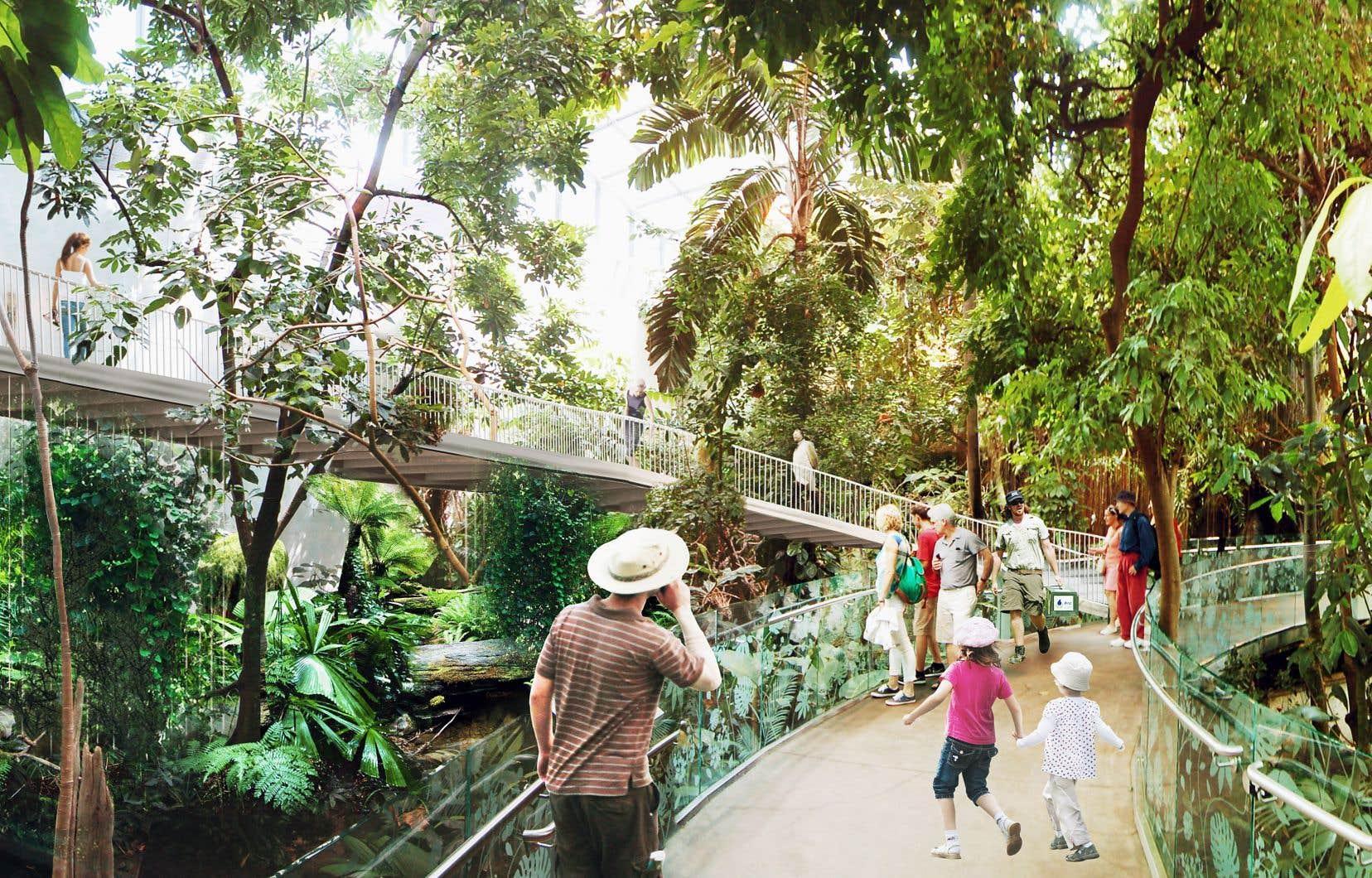 Une nouvelle passerelle permettra de rejoindre la mezzanine, d'où les visiteurs auront un nouveau point de vue qui leur permettra d'observer de plus près les animaux qui habitent la canopée.