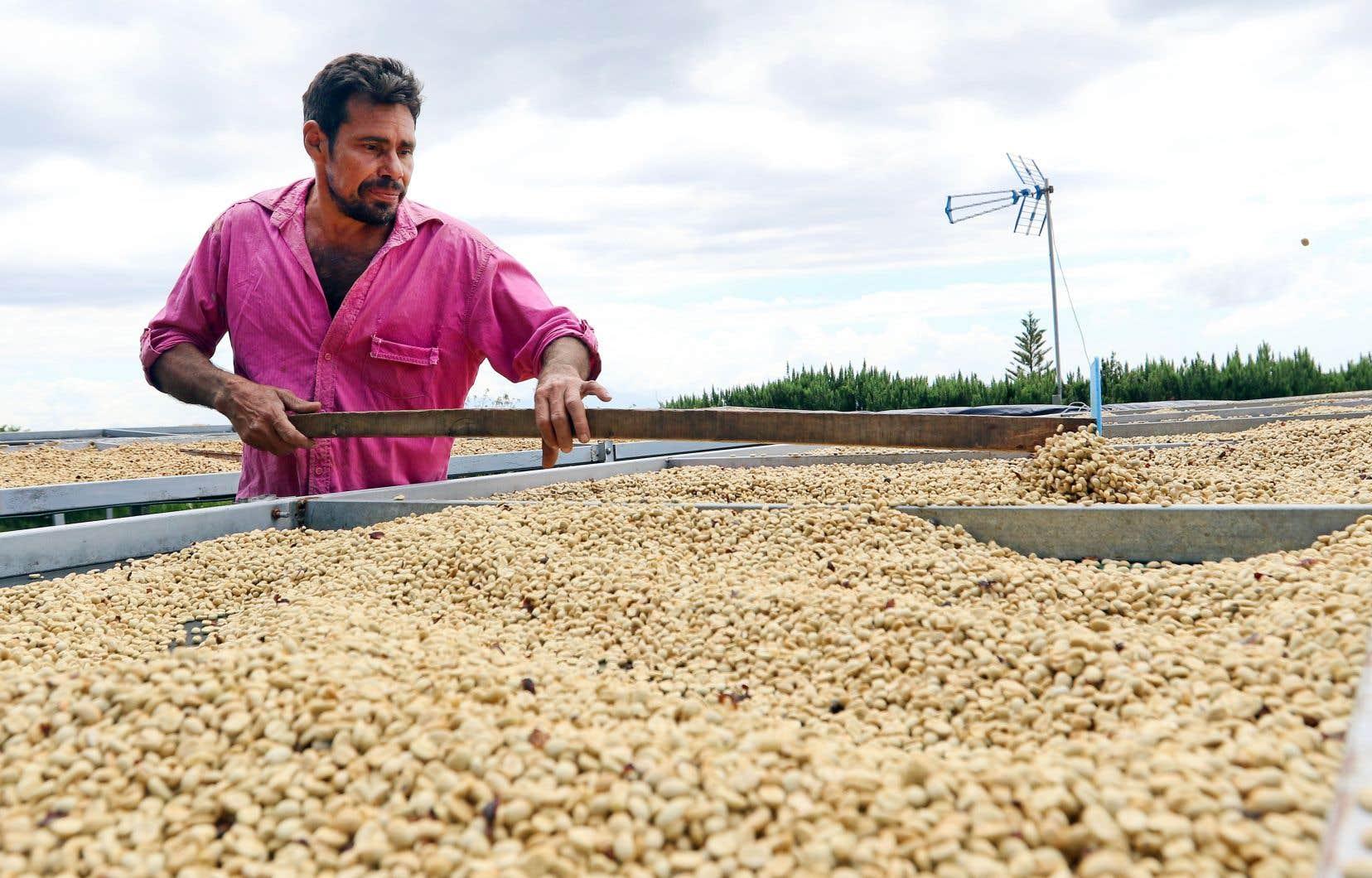 Gregorio brasse les grains de café pour éviter qu'ils ne figent ensemble.