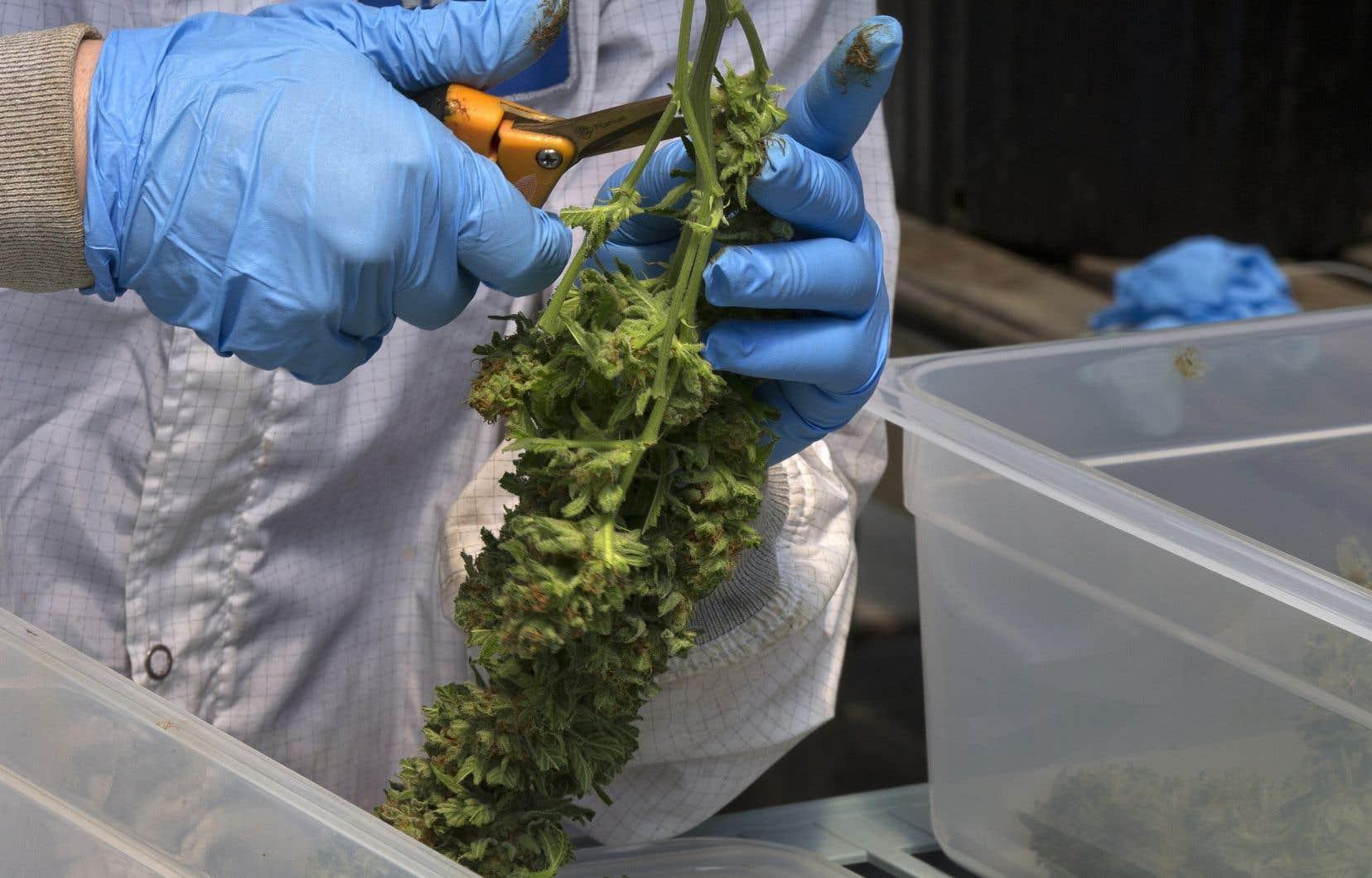 Le programme d'attestation d'études collégiales offrirait des cours de base en horticulture, en biochimie et en gestion, notamment.