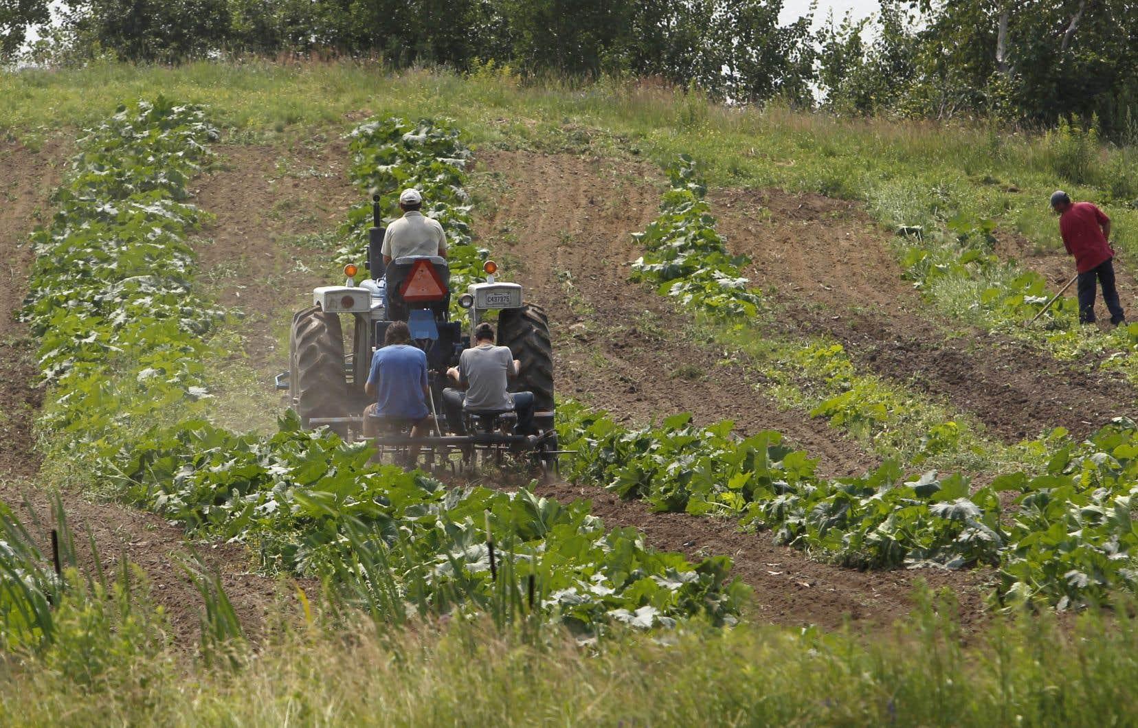 Si l'on se fie au dernier budget du gouvernement québécois, seulement 2% des investissements publics prévus au cours des cinq prochaines années sont destinés à l'agriculture biologique, précise l'auteur.<br />